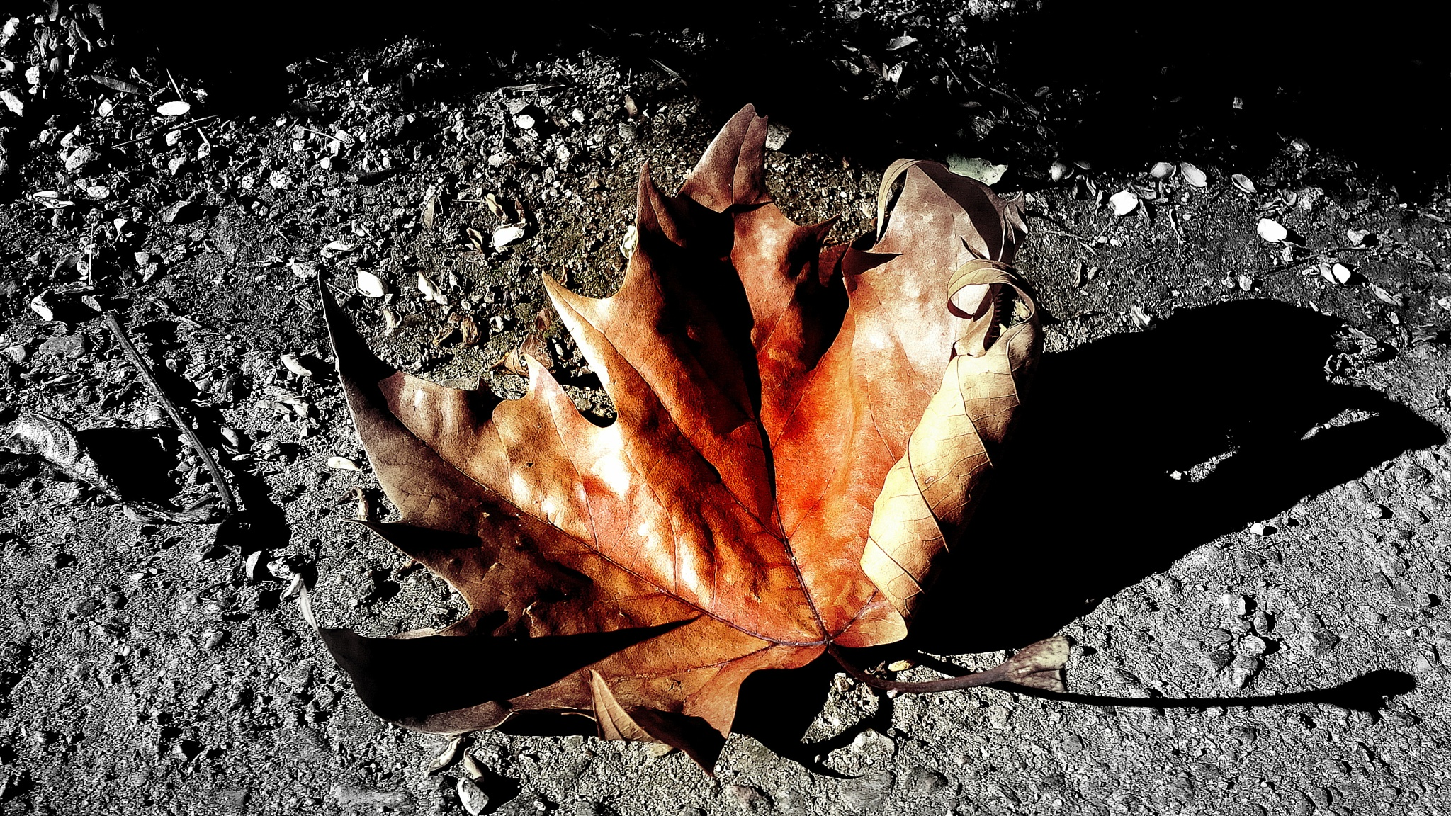 Autumn Leaf by Rudy Tarrazona Guacena