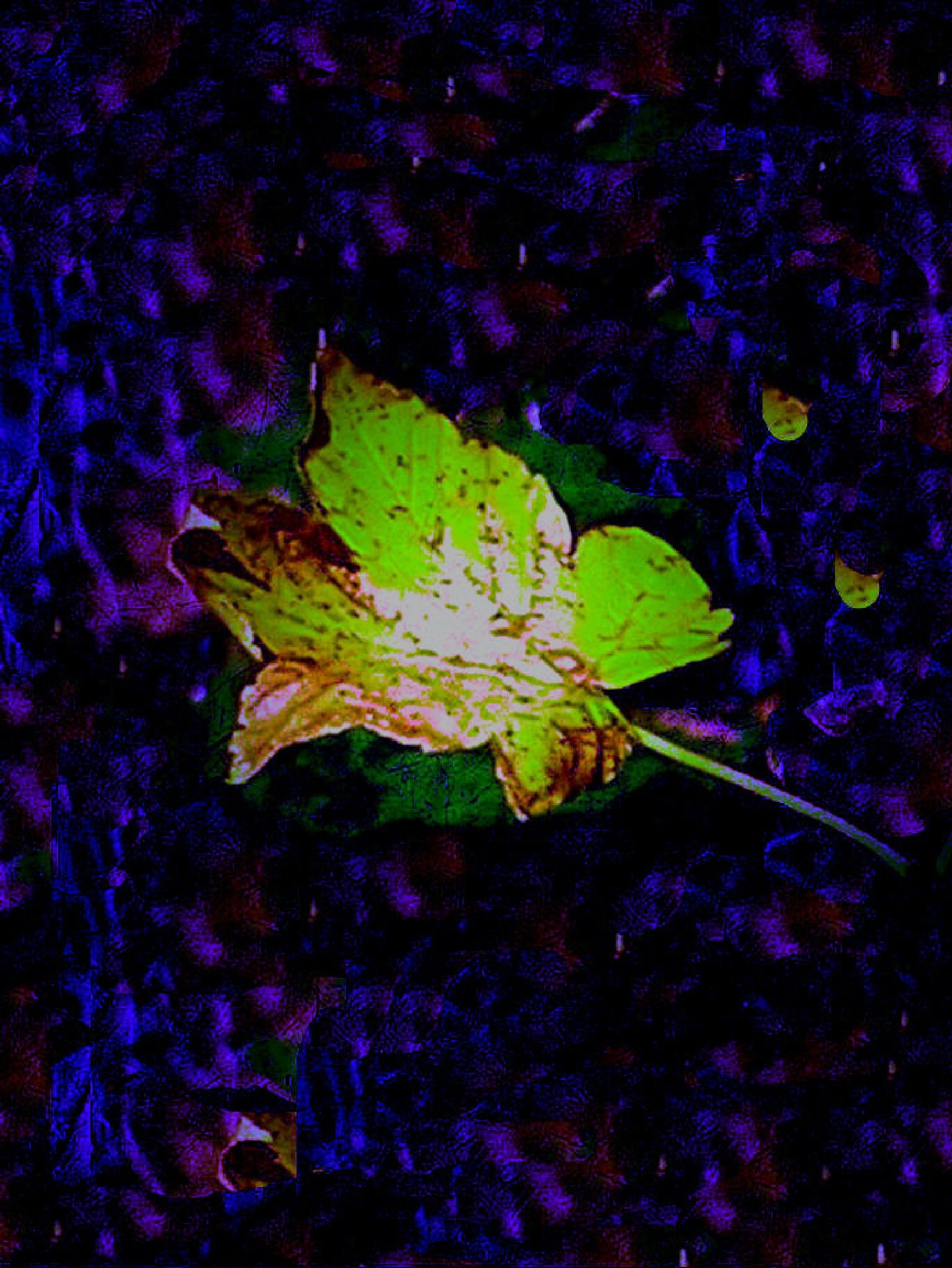 Autumn/Winter by Rudy Tarrazona Guacena