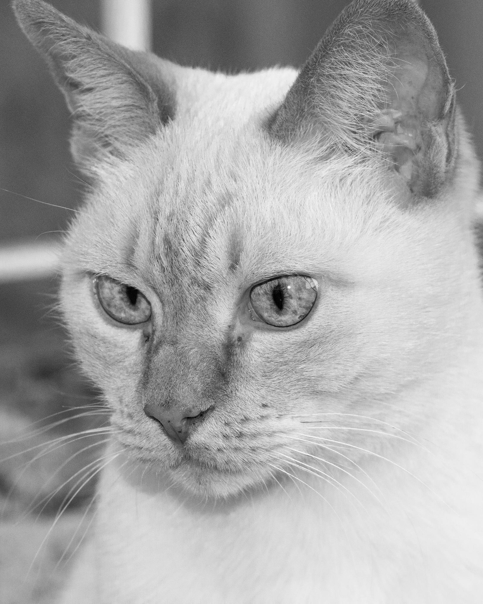 Cat by Rogério Pinheiro