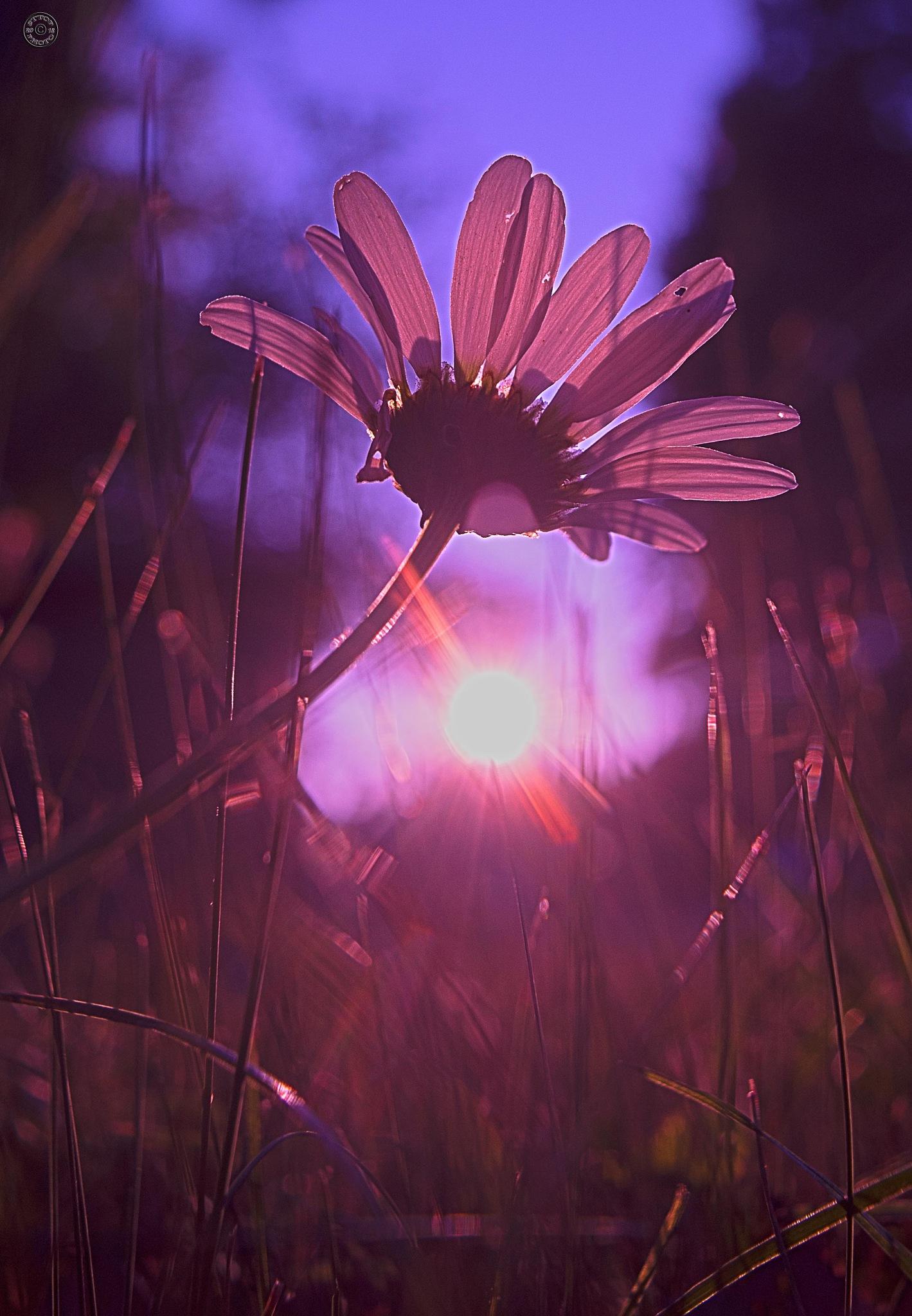 sunset by Belgerathone