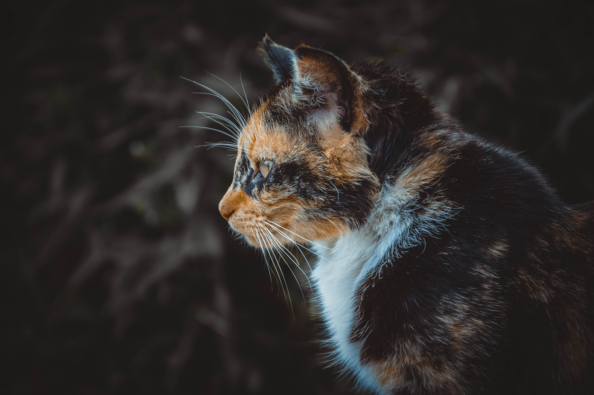 Cat by photographer_db