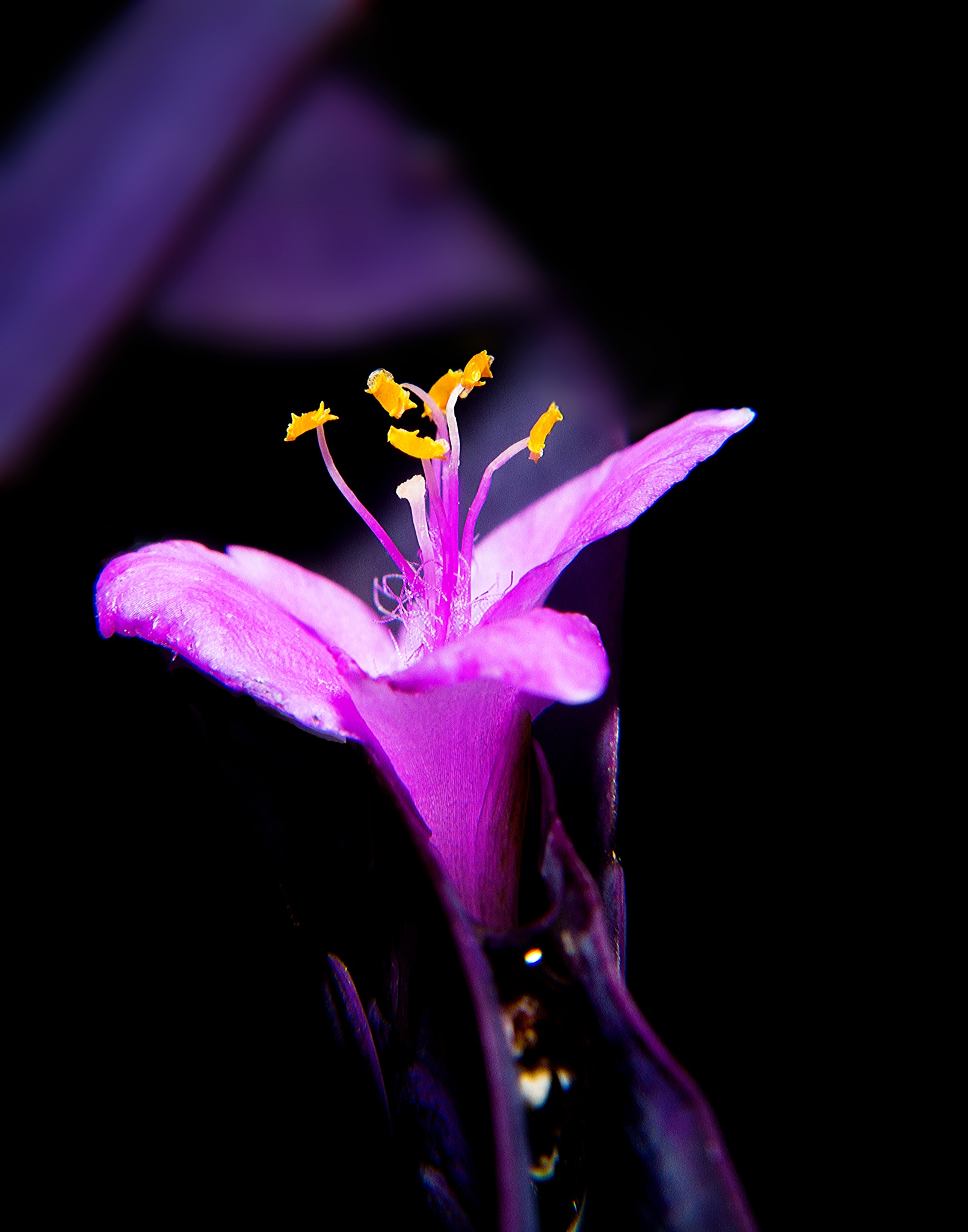 Purple Flower by mfontaine