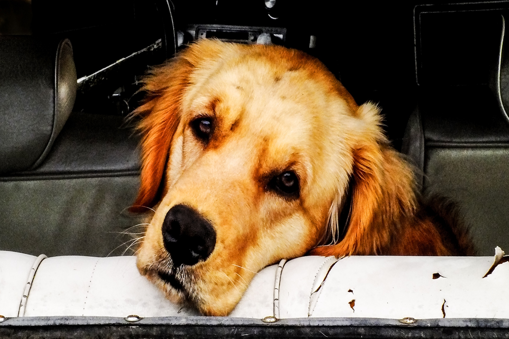 Old Dog in the Back Seat by mfontaine