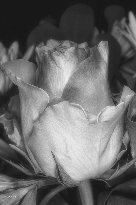 faded to grey by Michael Brady