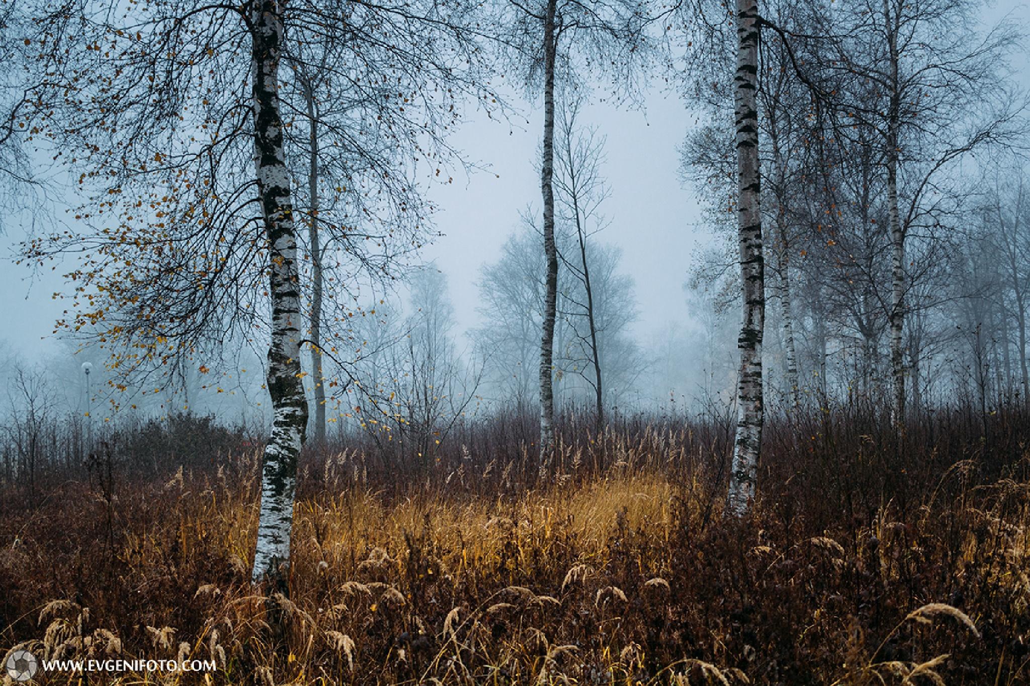 Autumn And Morning Fog by Jevgeni Kurnikov