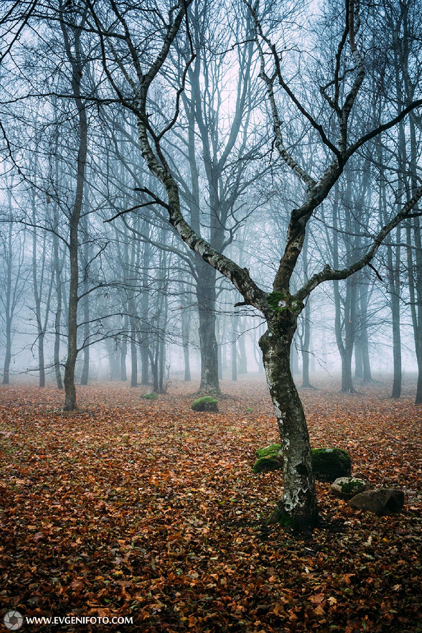 Morning Fog  by Jevgeni Kurnikov