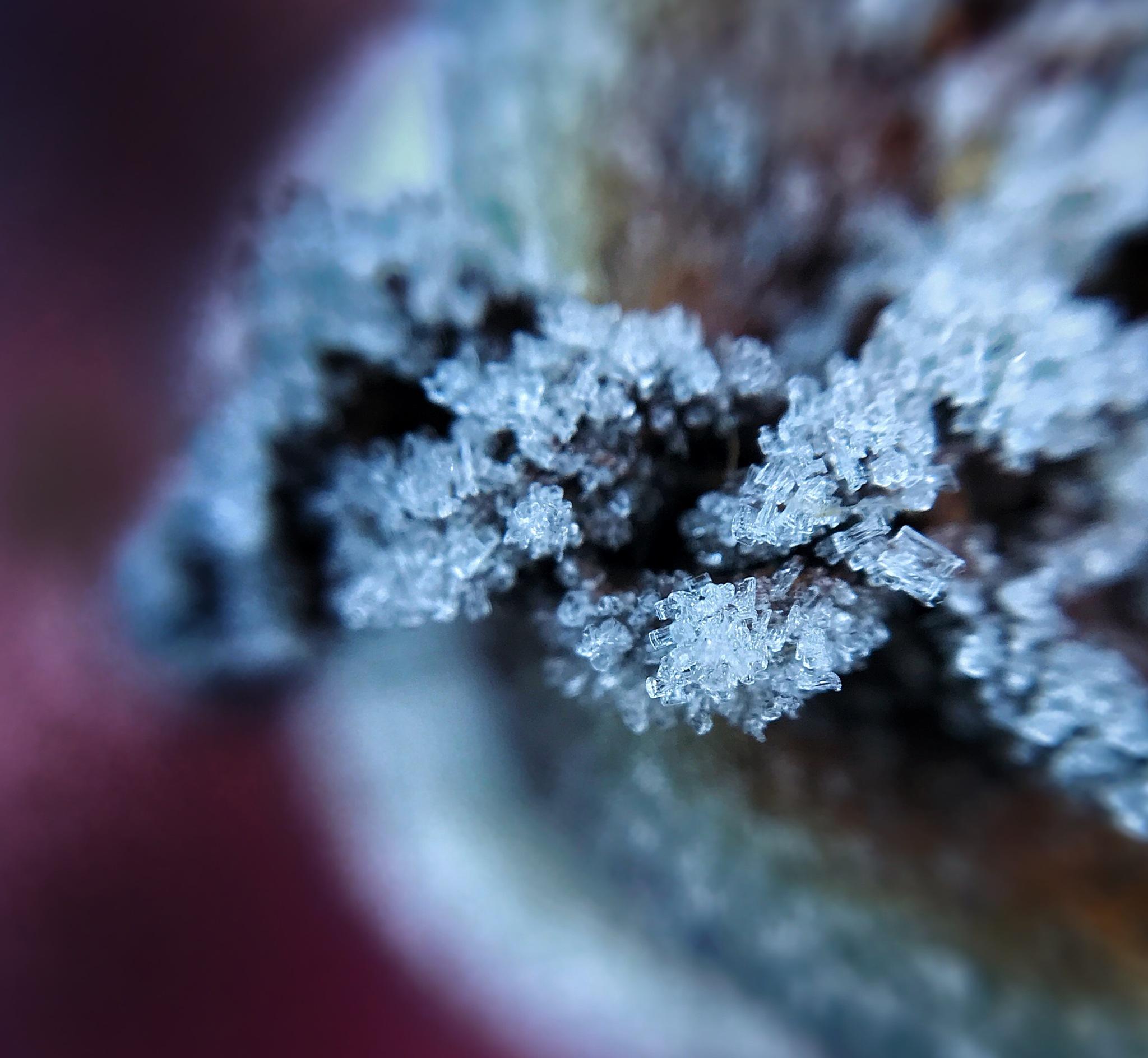 Morning frost 3 by Peter van der Waard