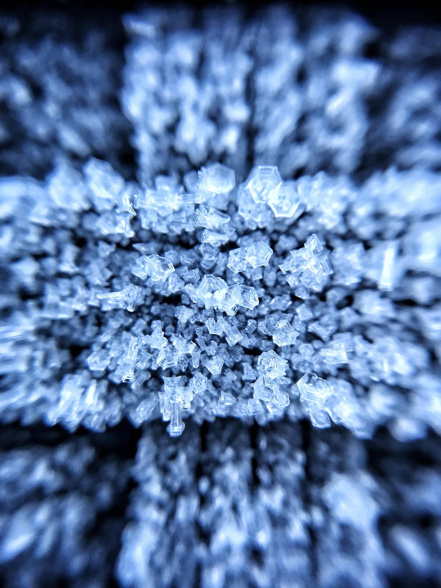 Morning frost 2 by Peter van der Waard