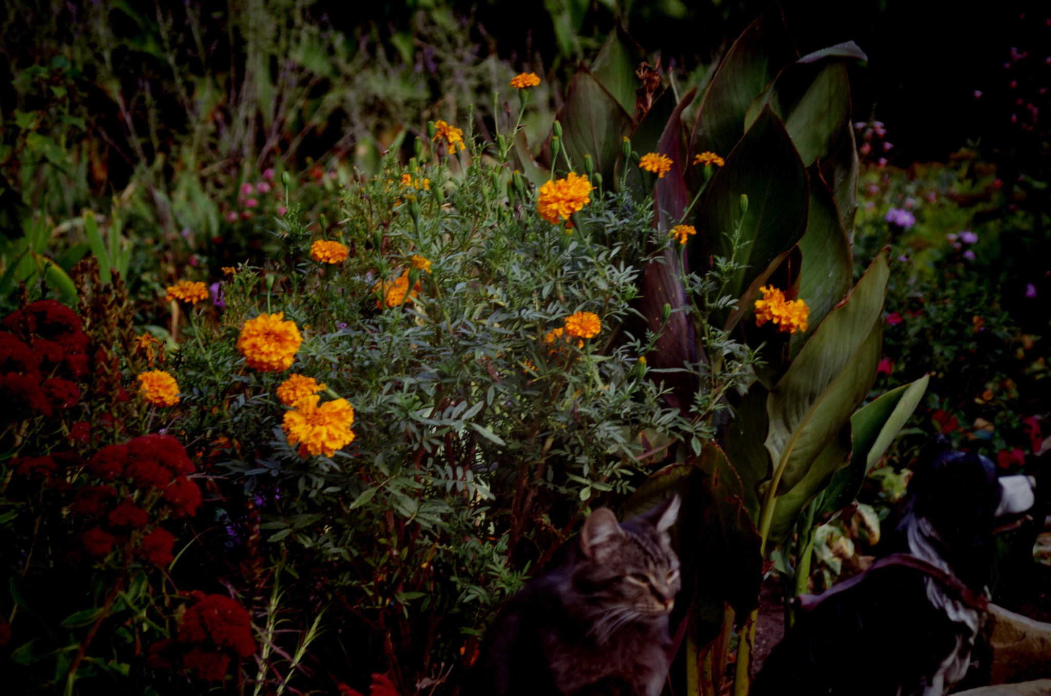 cat in the garden by david8900