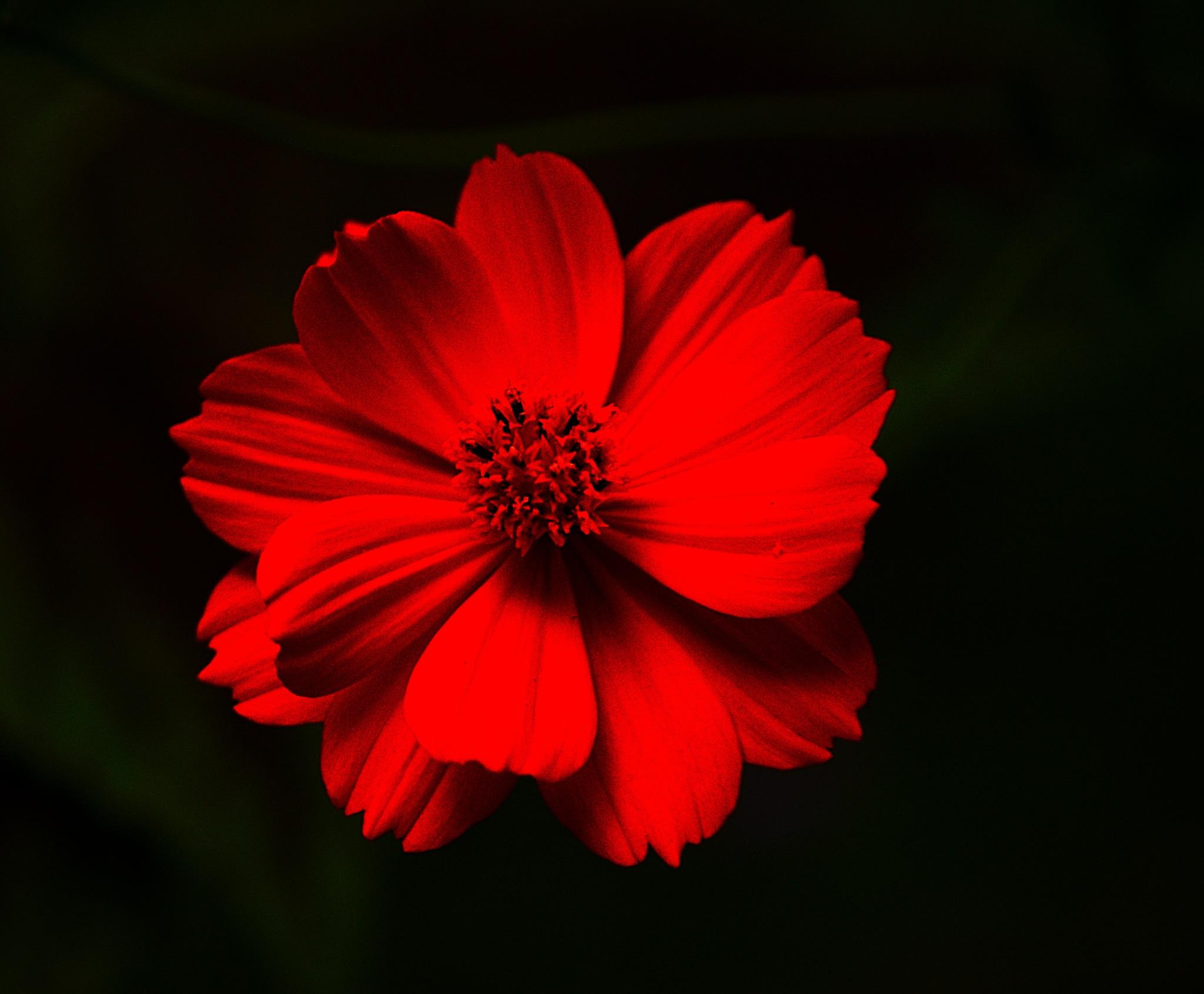 flower1c by david8900