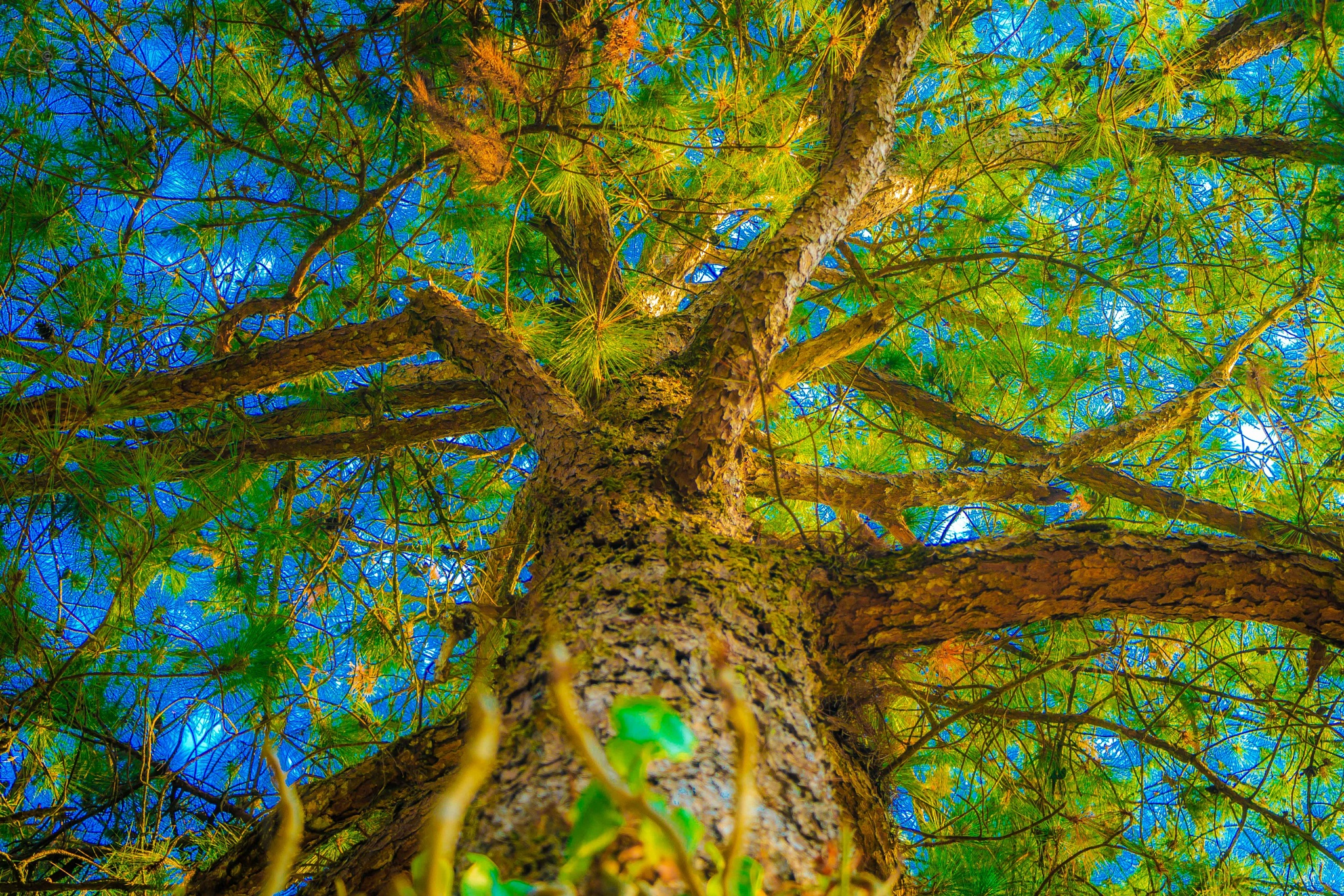 Blue & Green by lynardsnaps