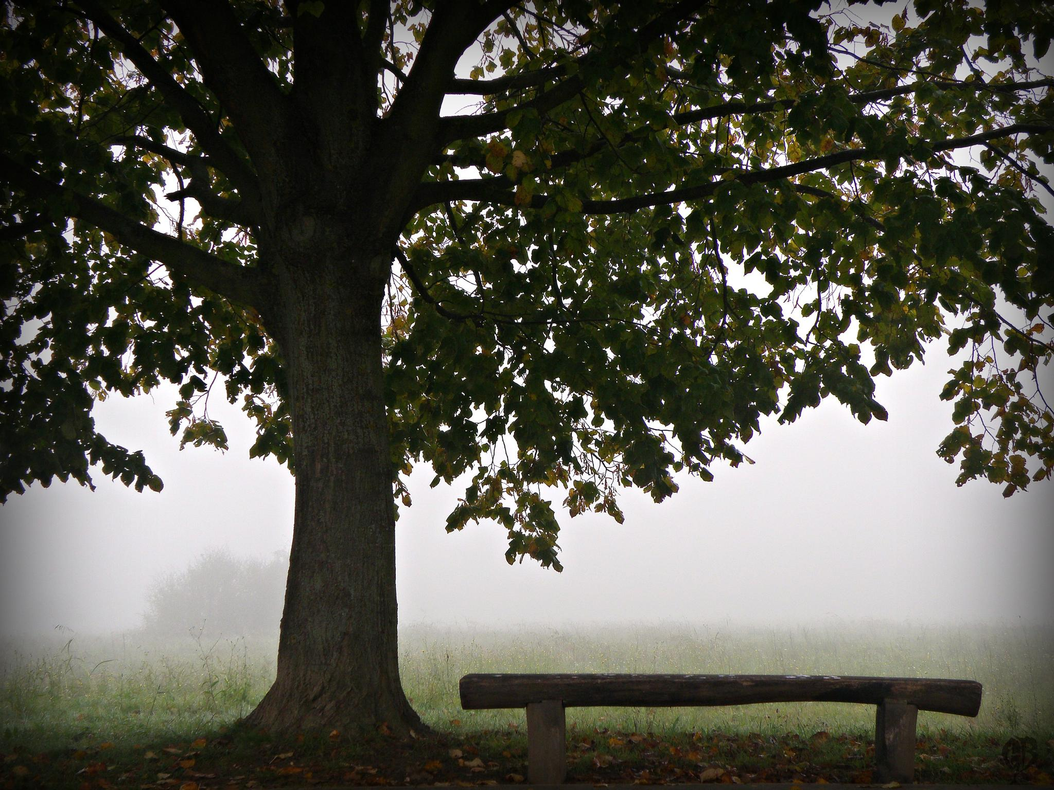 melancholy beneath the linden by Gara
