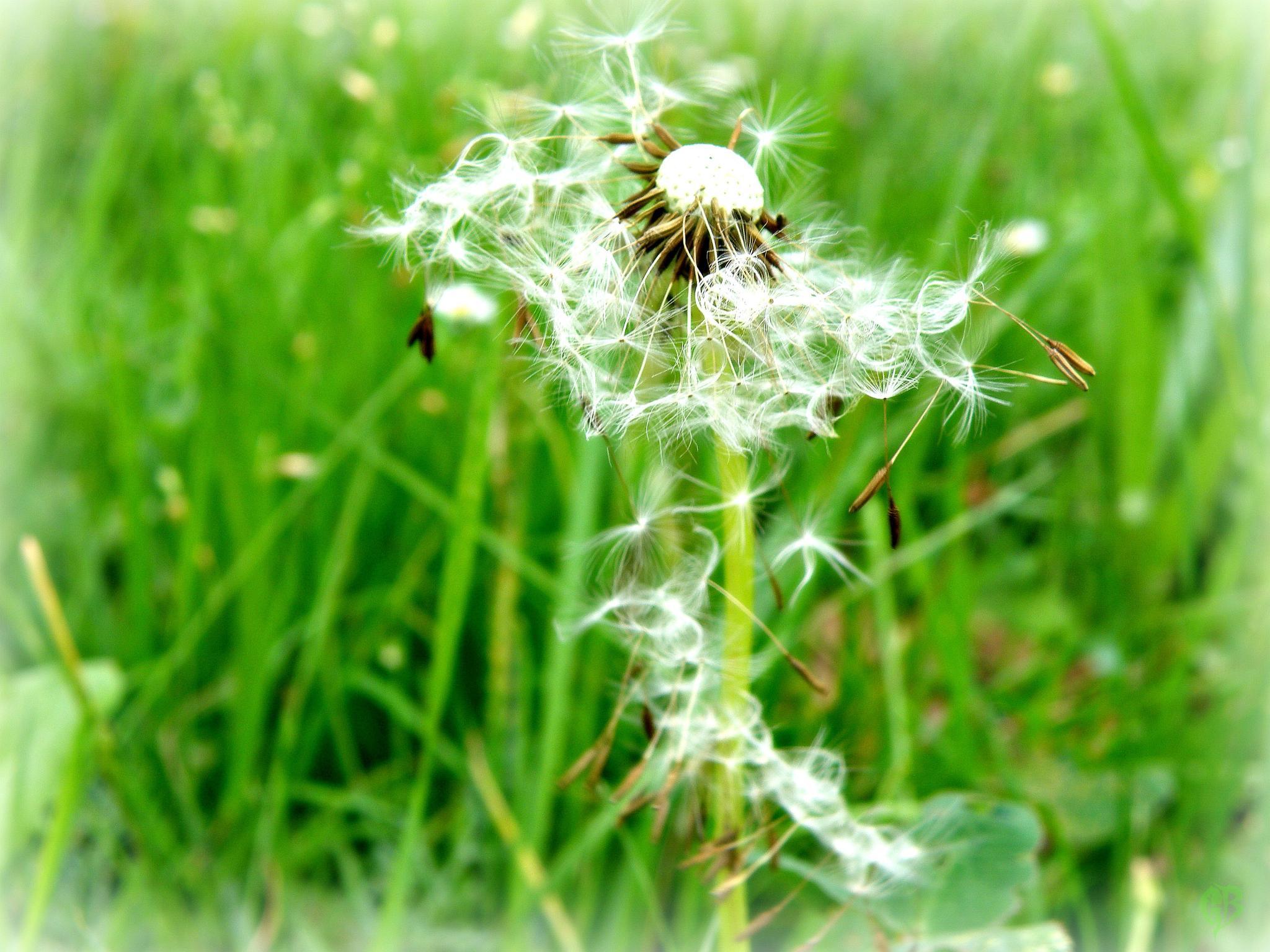 torn dandelion dress by Gara