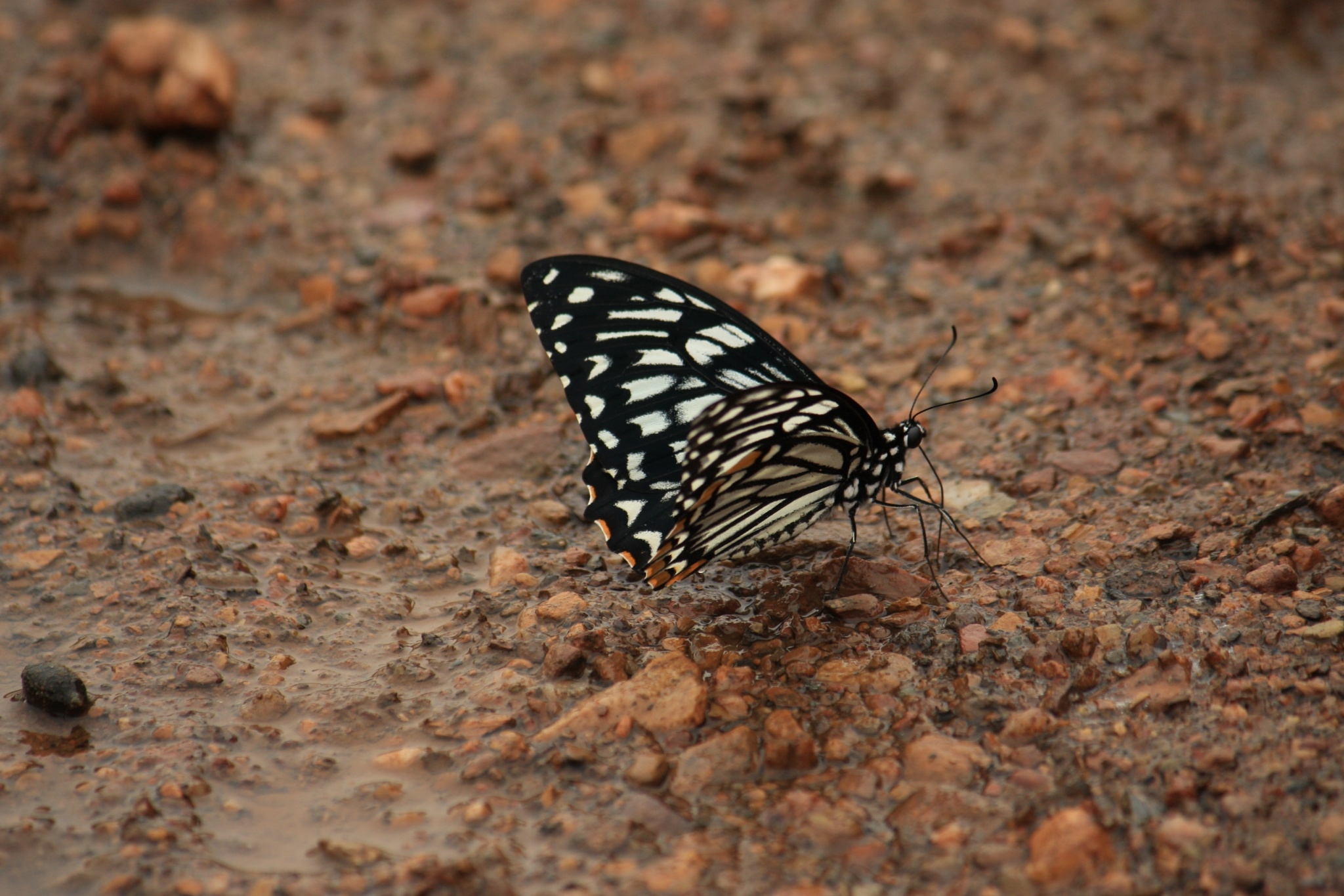Butterfly.. by sudipmitra