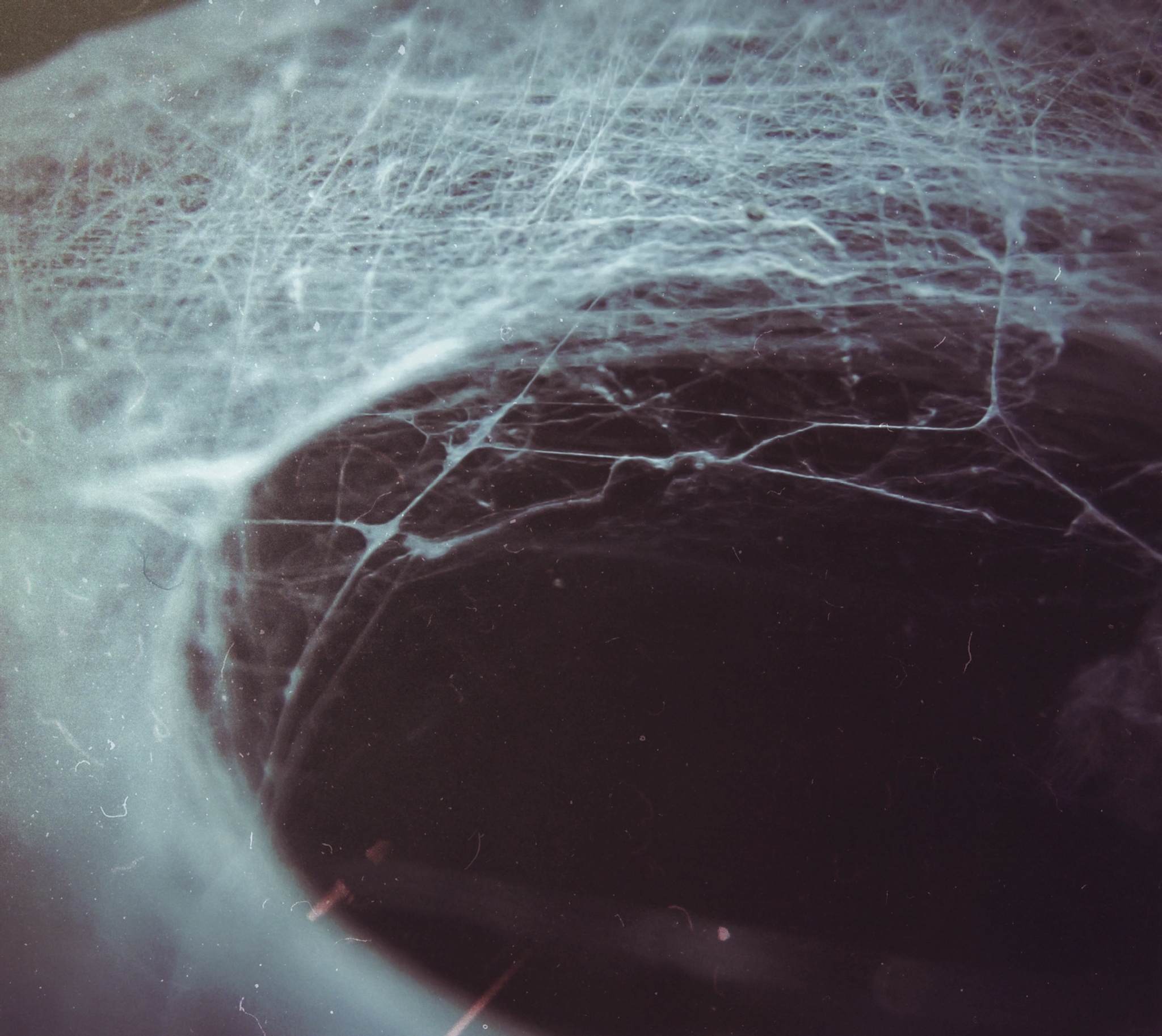 Spider web  by Corina Toma