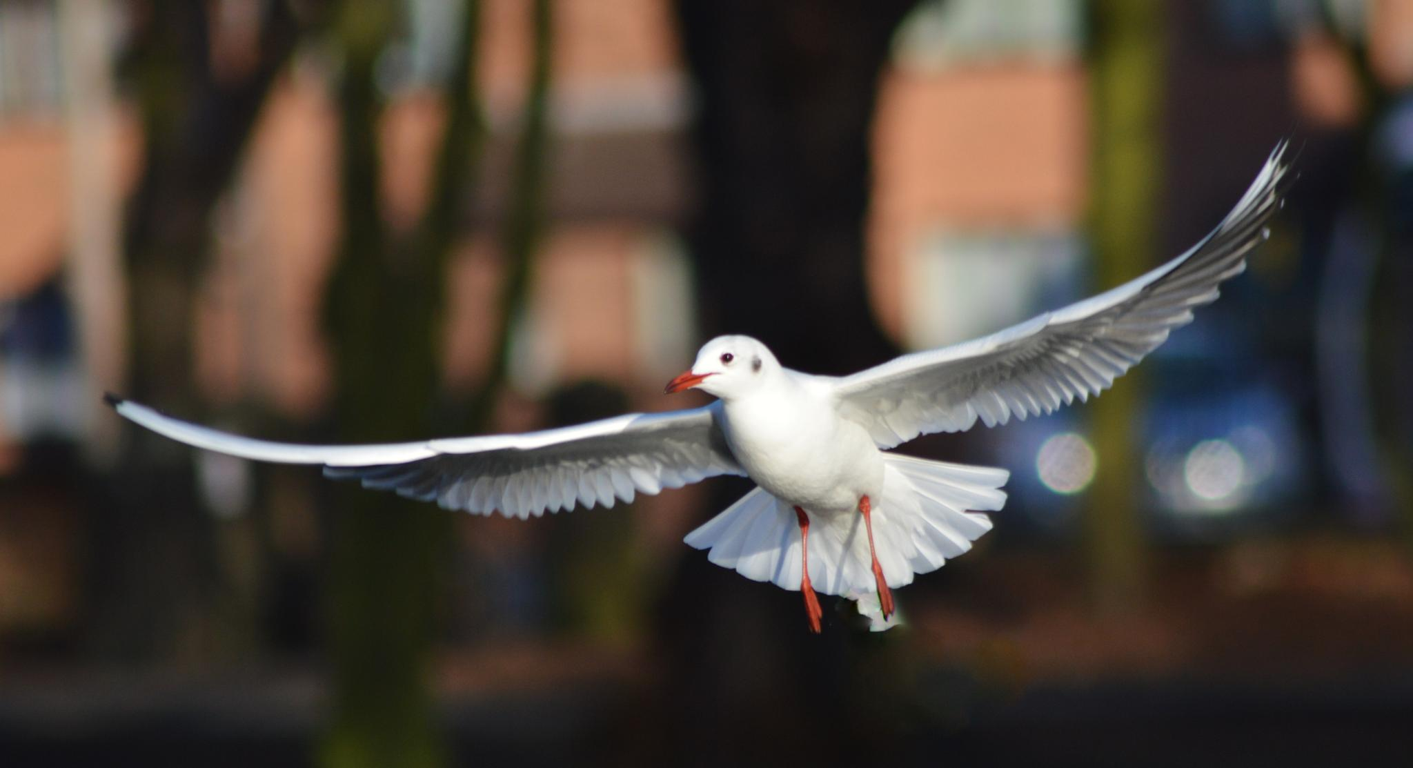 bird in flight by cameraman