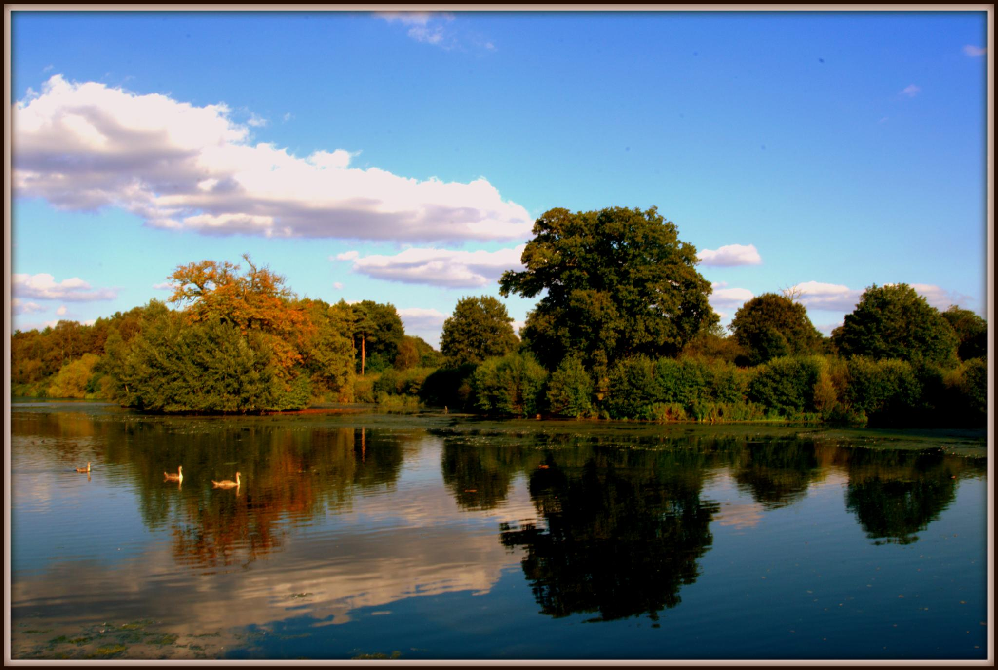 Clumber park lake by cameraman