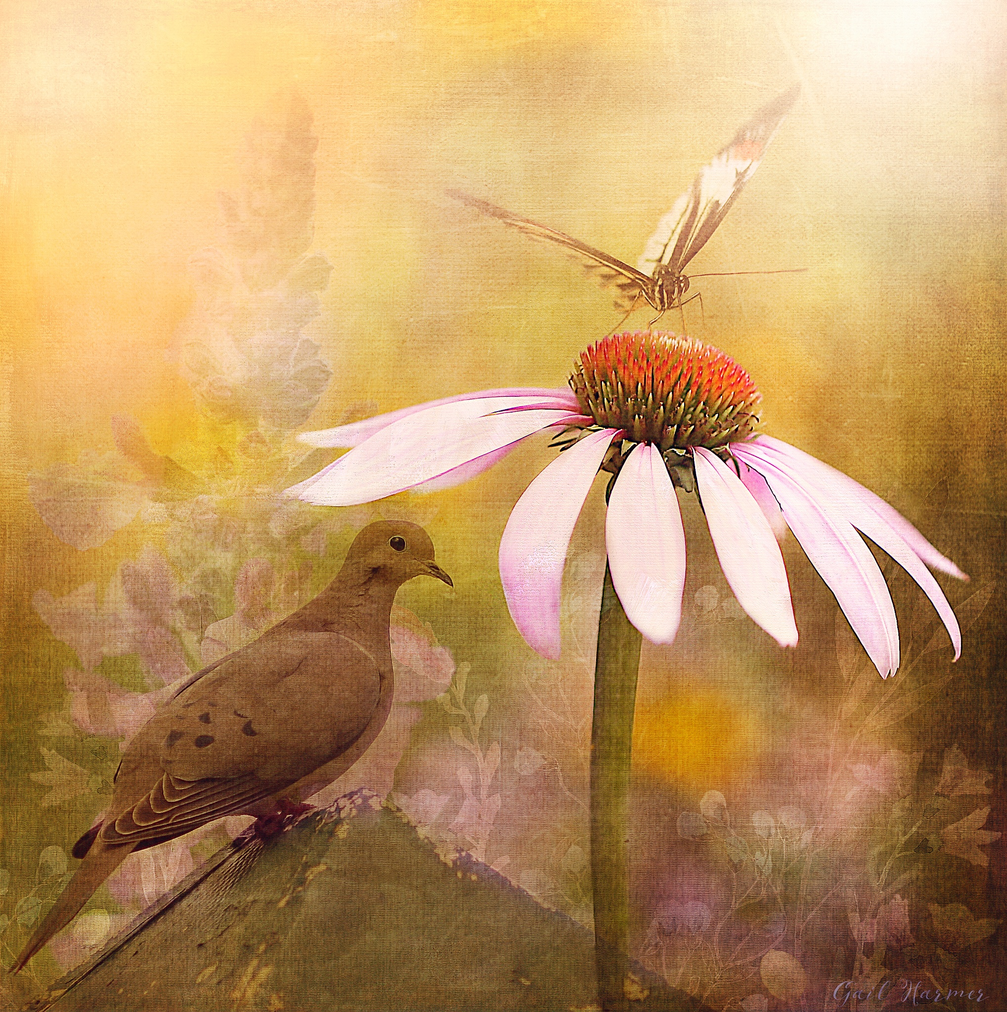 The Dove and The Butterfly by GailHarmer