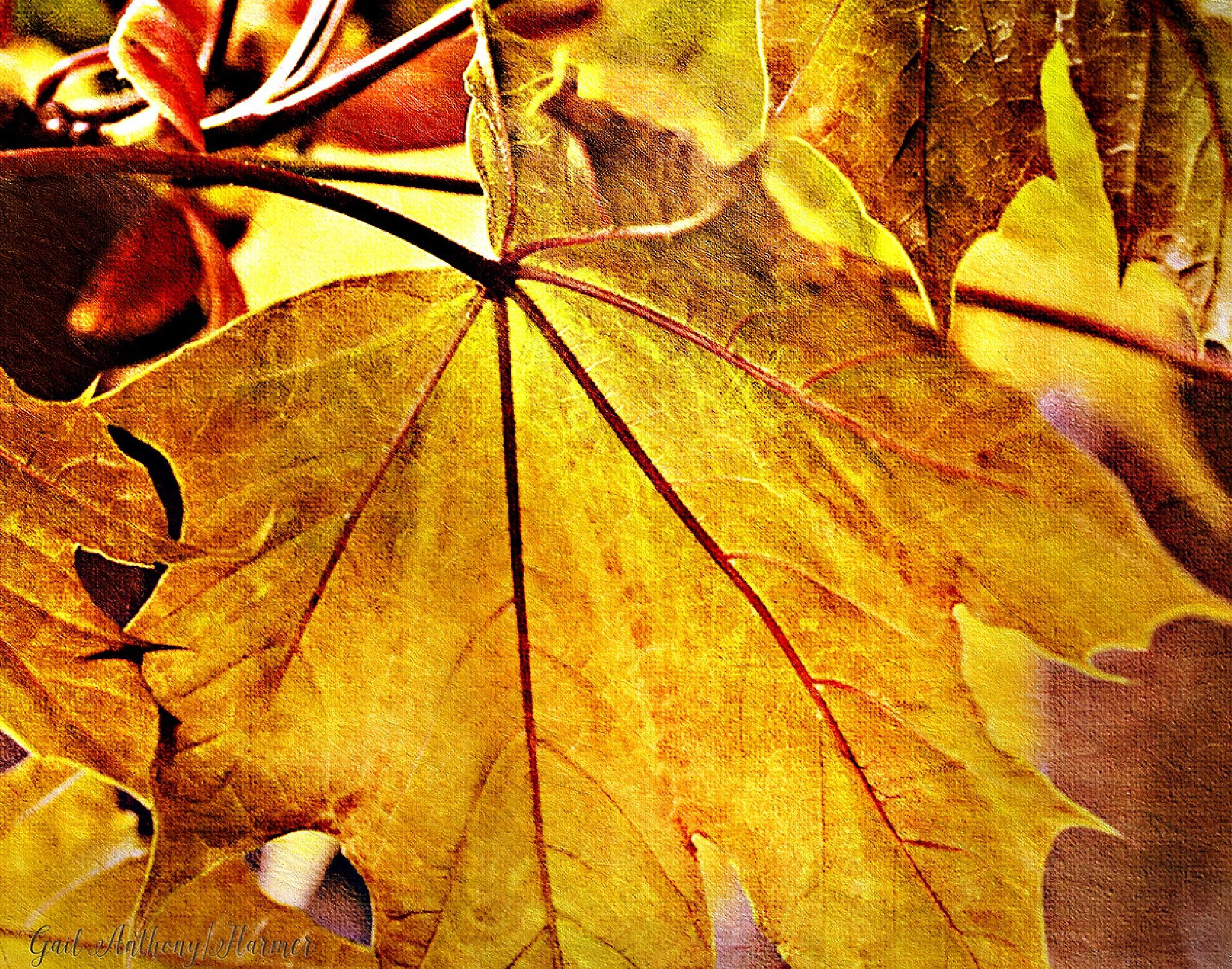 Autumn Hues by GailHarmer