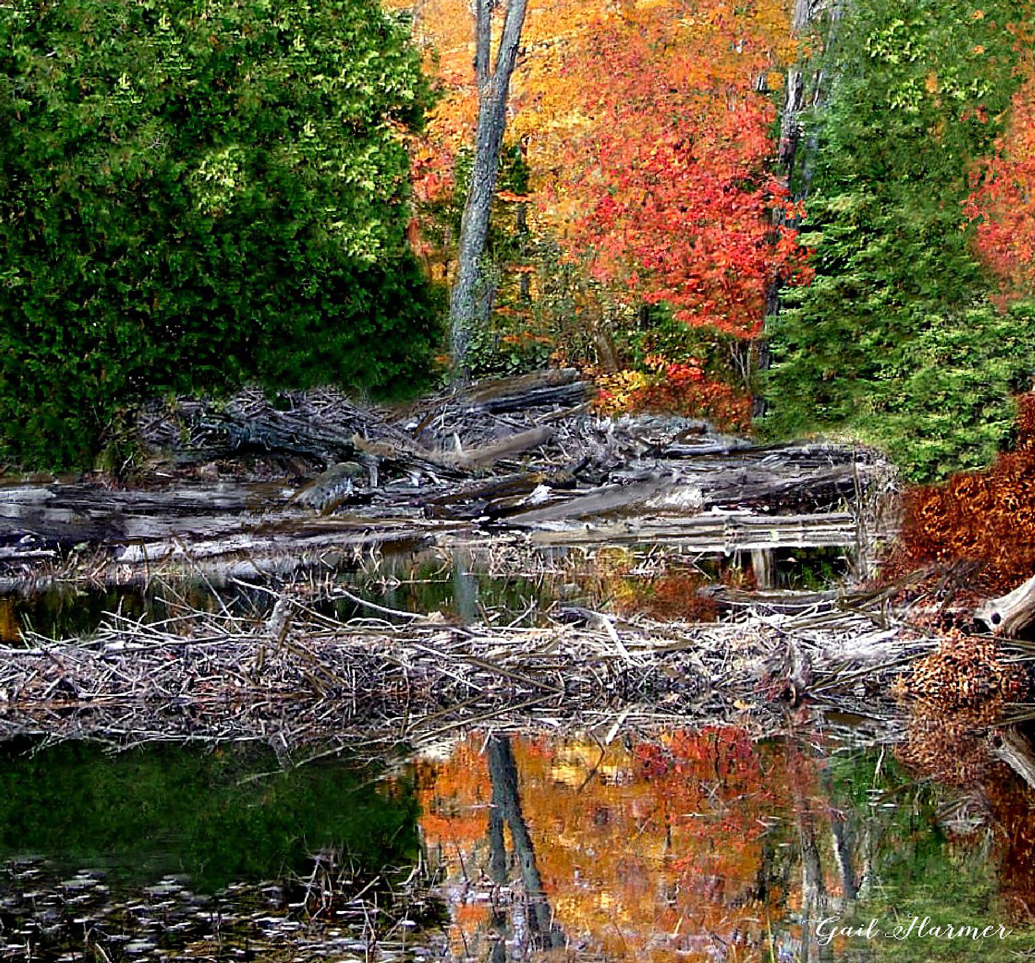 Beaver Dam - Silent Lake by GailHarmer