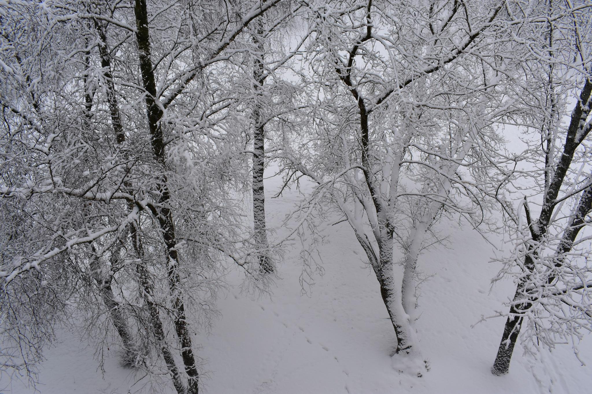 Photo in Rural #ziema #jugla #snowy