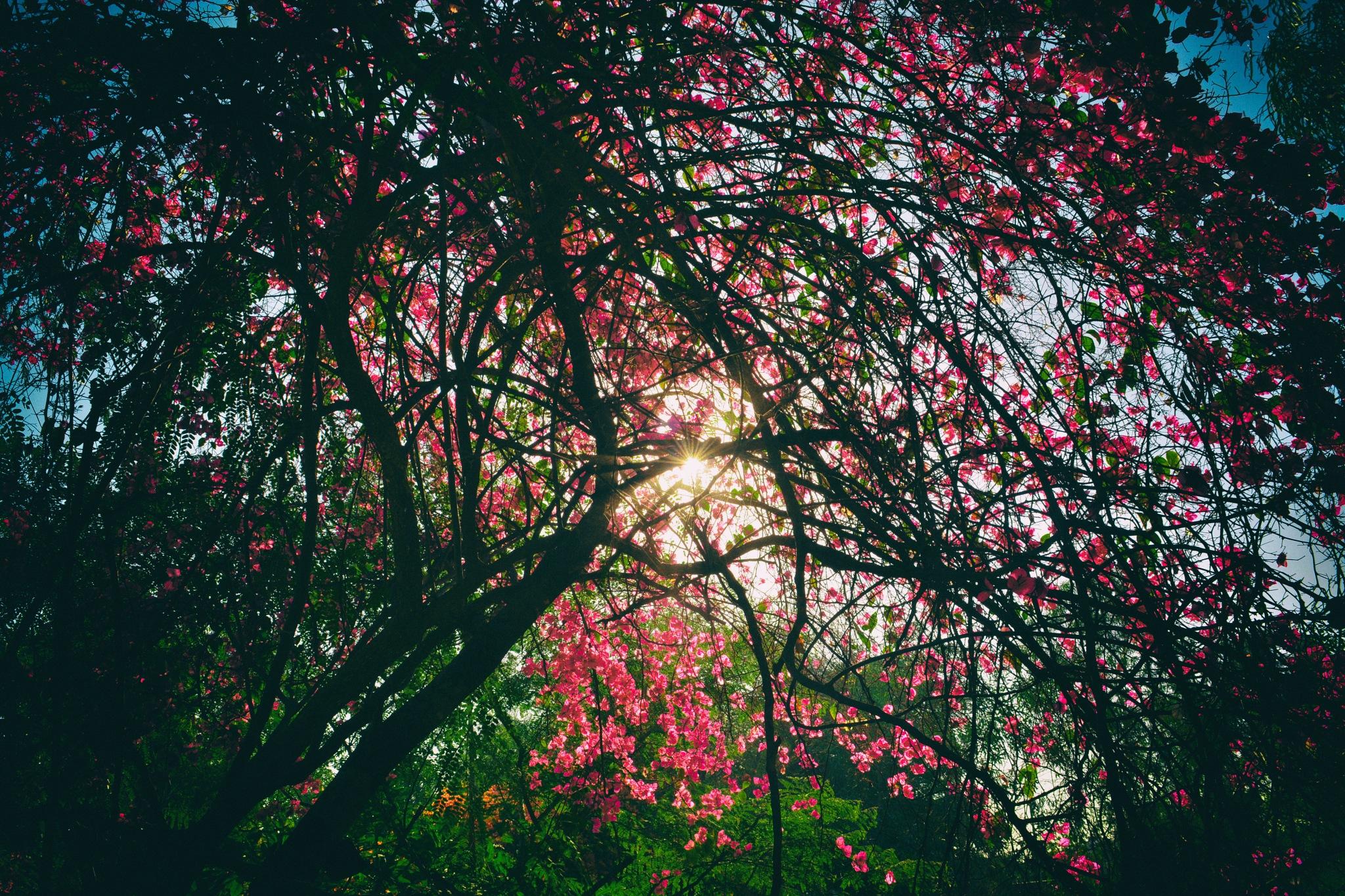 Nature by DIPTY KUMARI