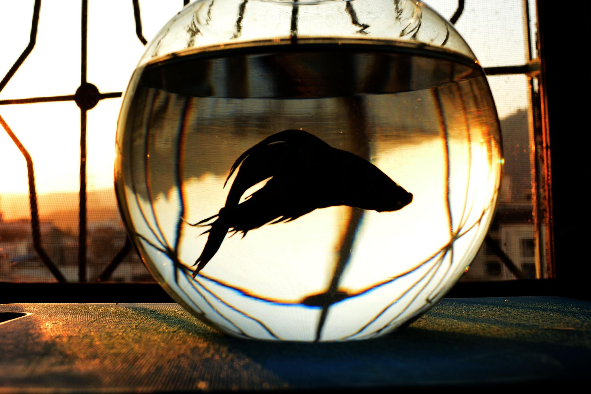 silhouette by DIPTY KUMARI