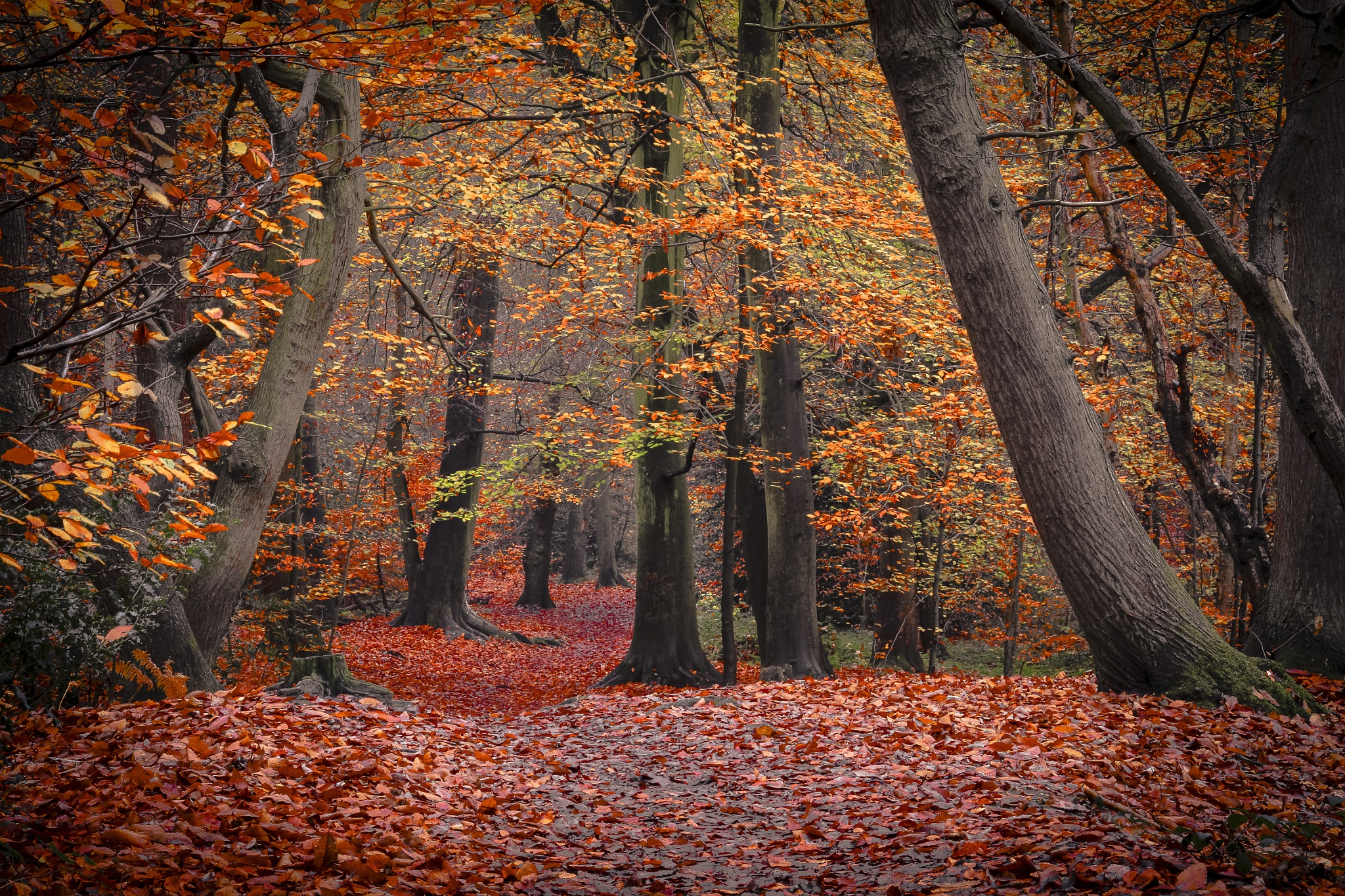 The Enchanted Forest. by Frederick74
