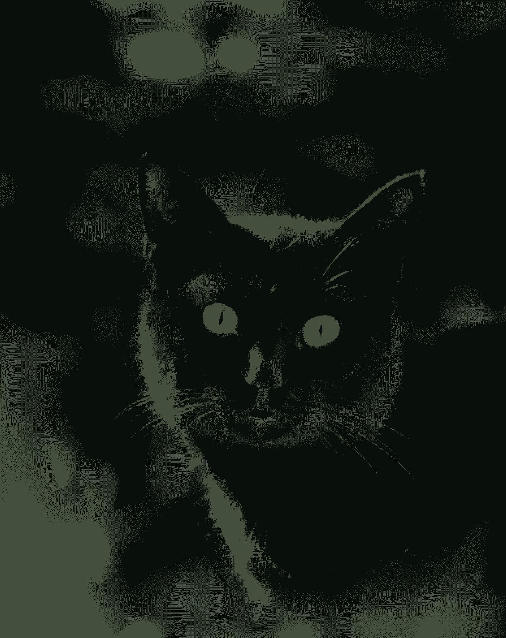 Cat Thomas by Alexandr  V. Seleznov