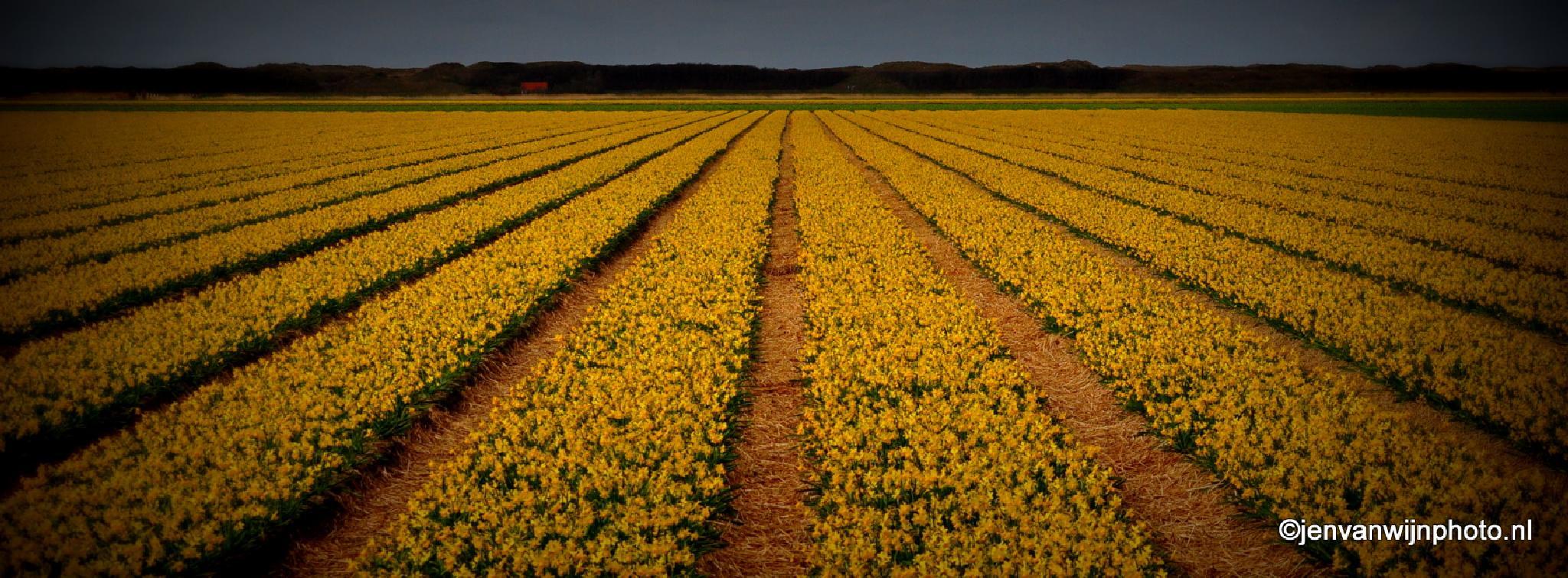Dutch Flowers by Jen van Wijngaarden