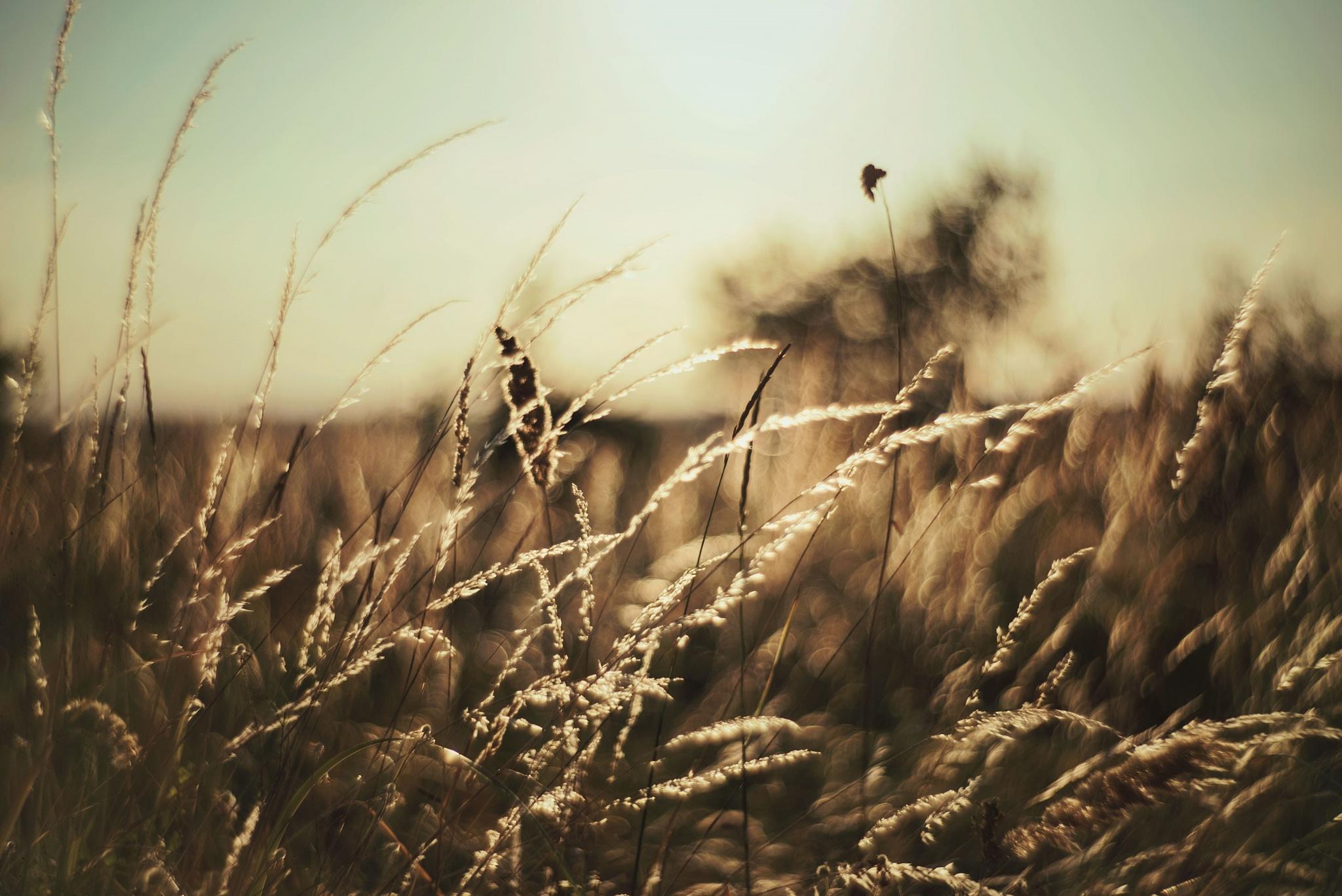 Summer Field by teodoranenadov