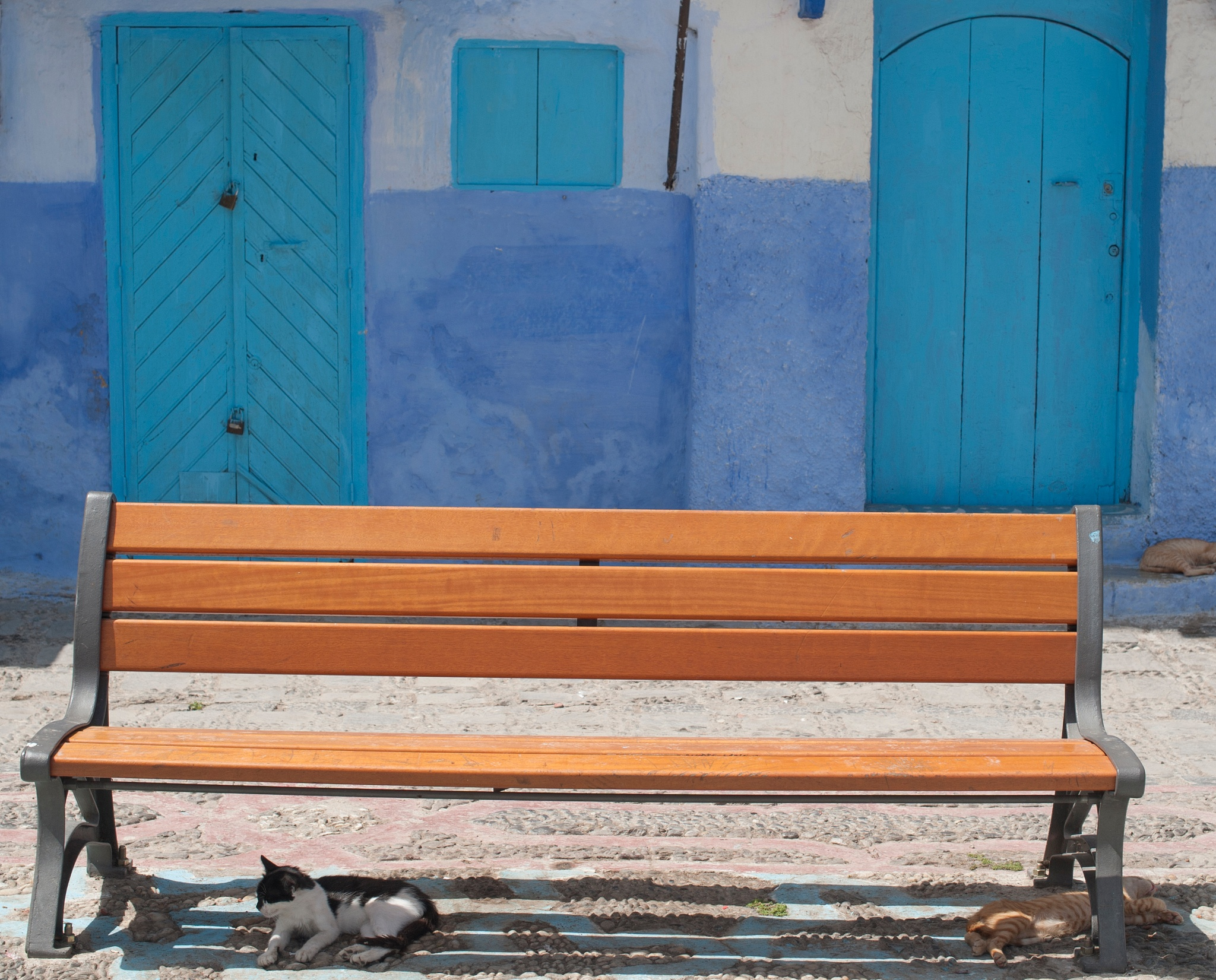 Chefchaouen cat, Morocco. by desmcmahon5