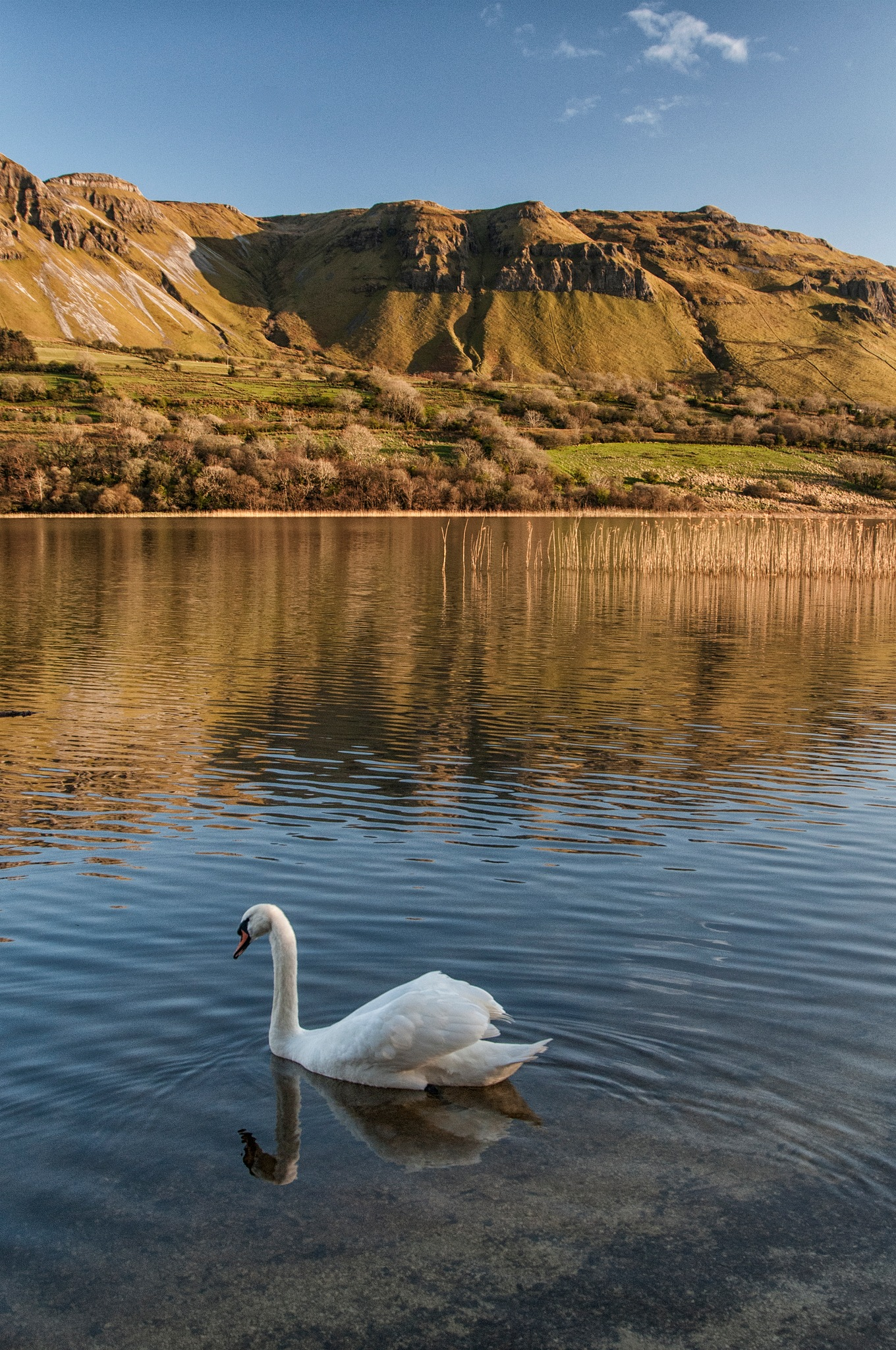 Swan, Sligo by desmcmahon5