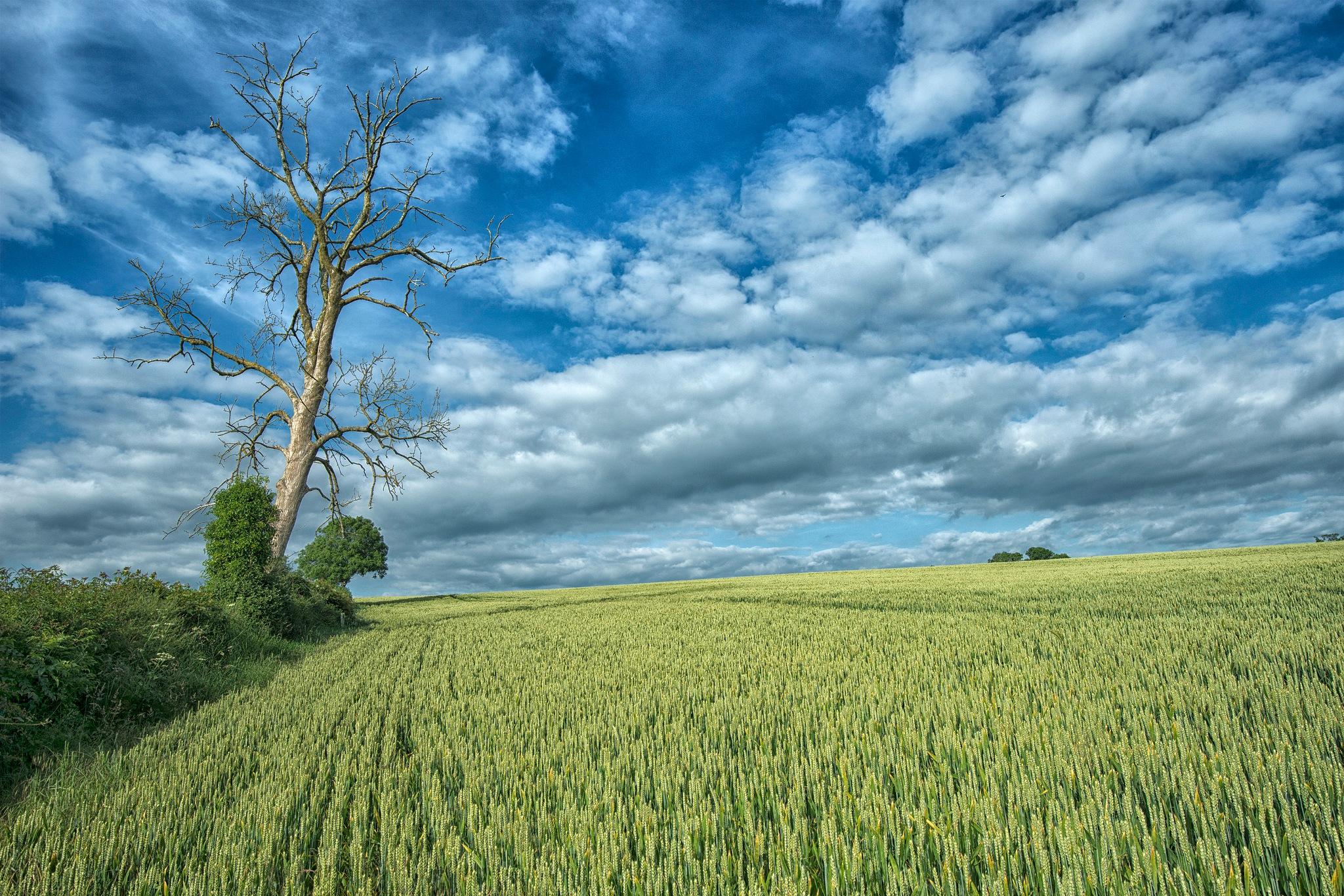 Field, Ireland by desmcmahon5