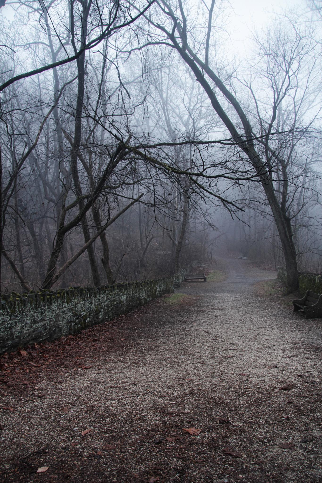 Wissahickon Fog by Ultravphotography