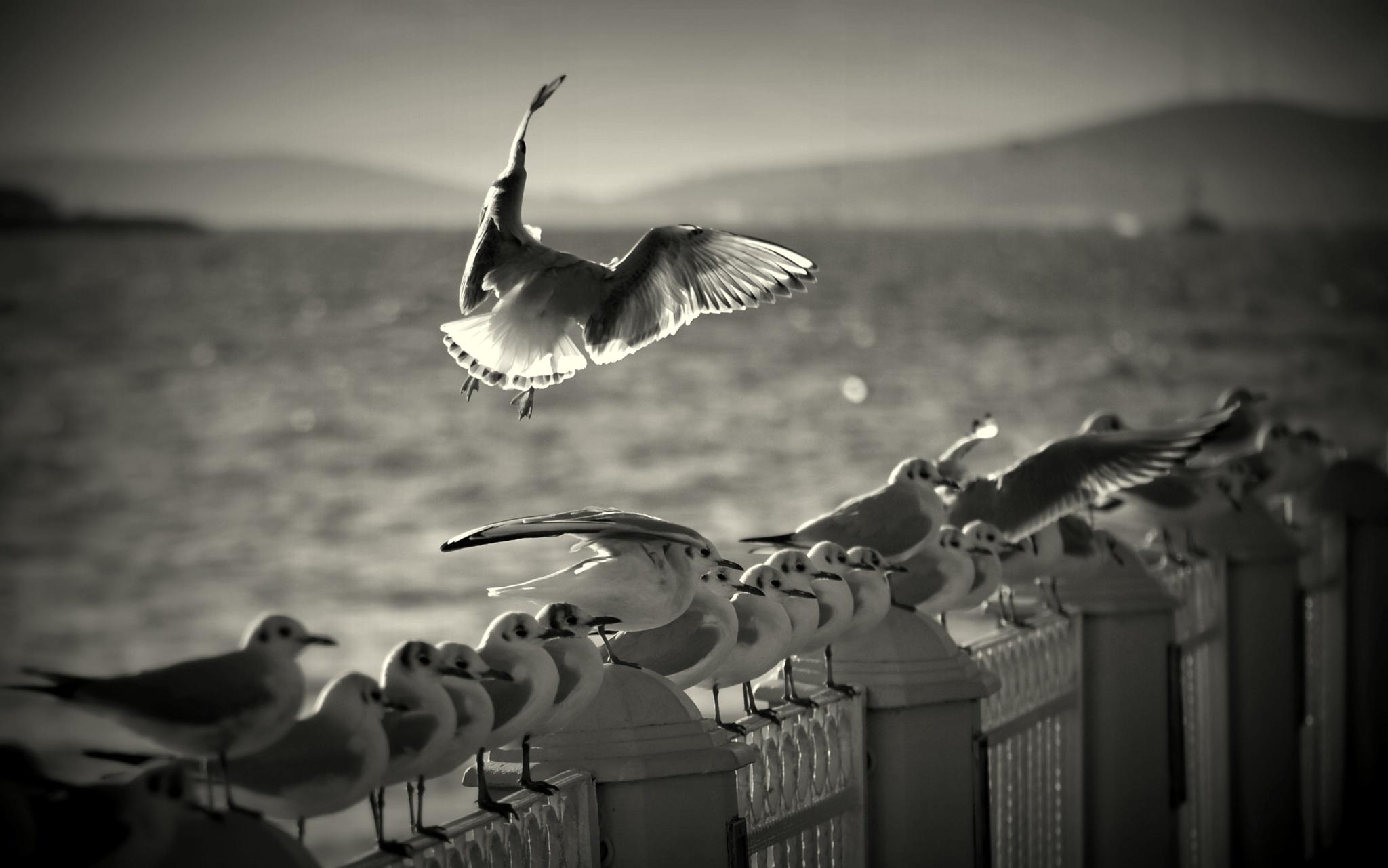 Landing by vabserk