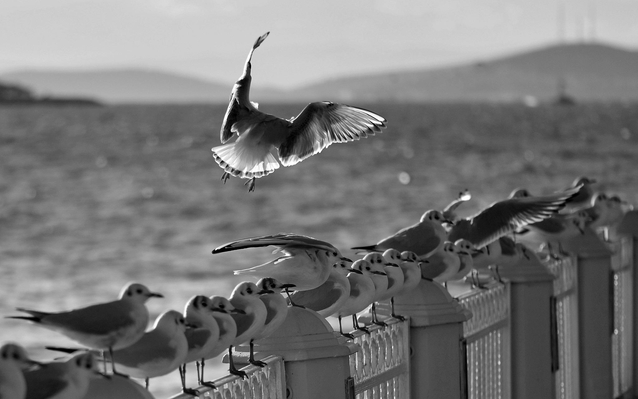 Wings by vabserk