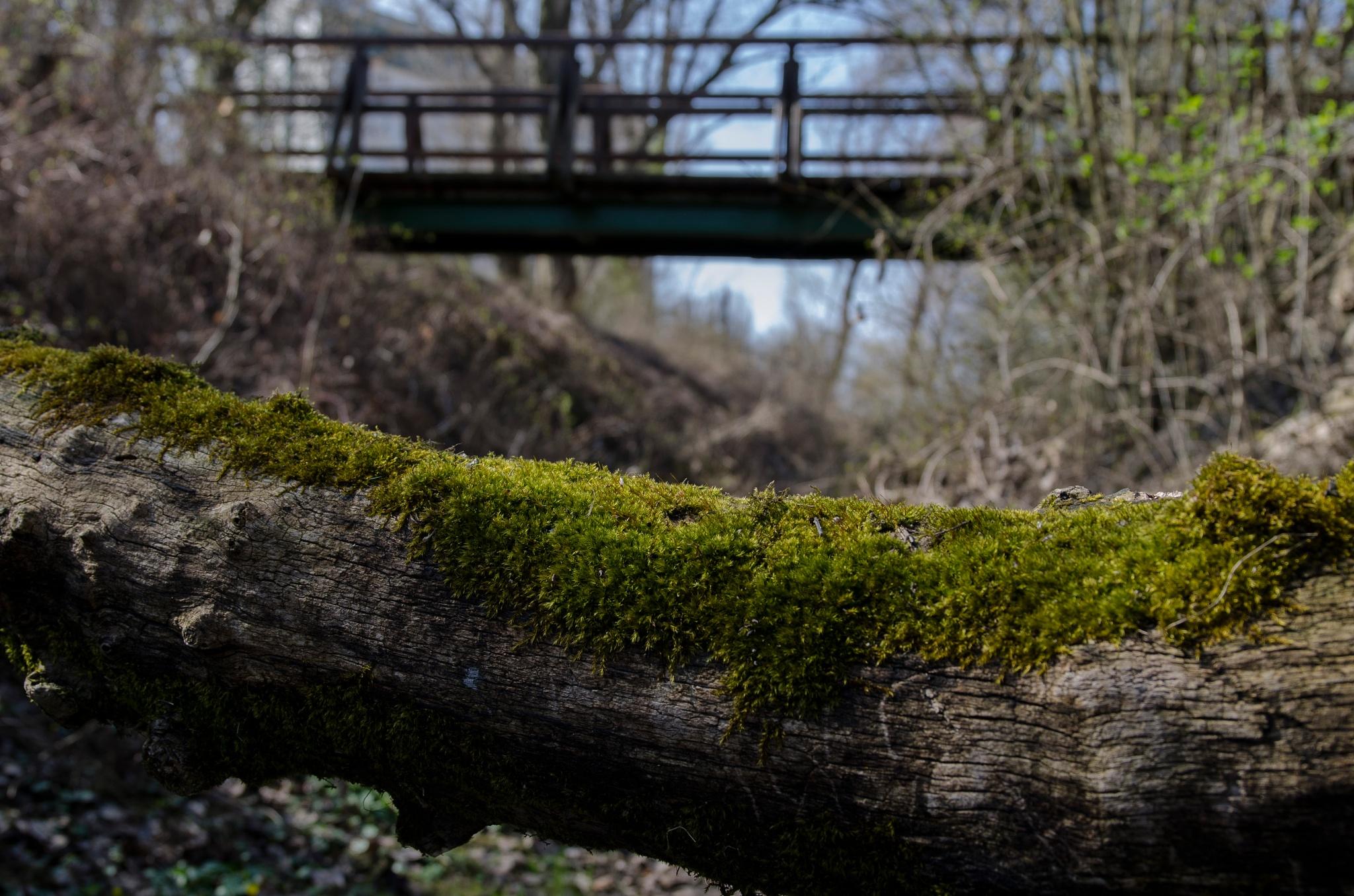 Green Bridge  by BokiS