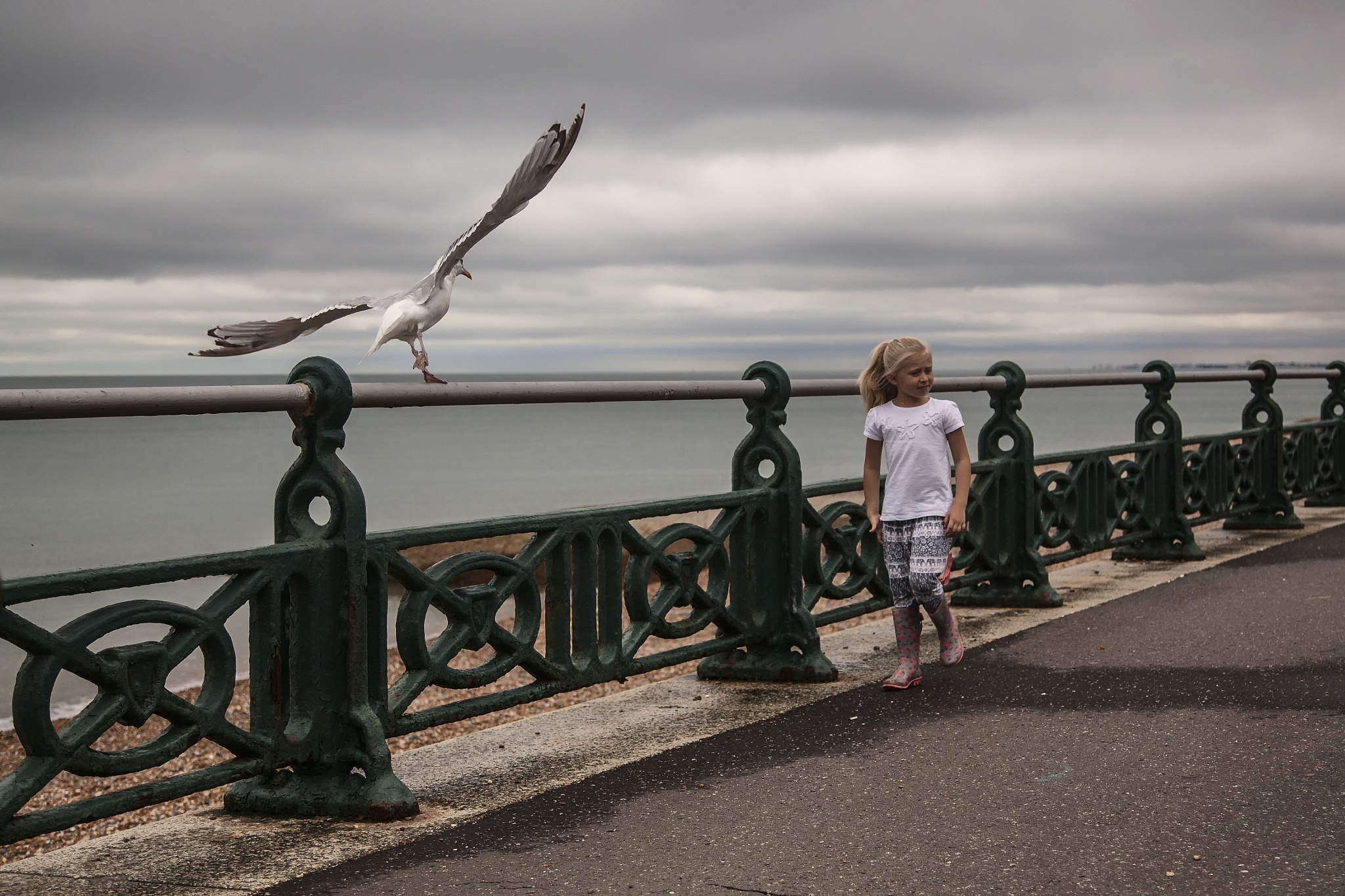 Girl meets gull by JulianPett