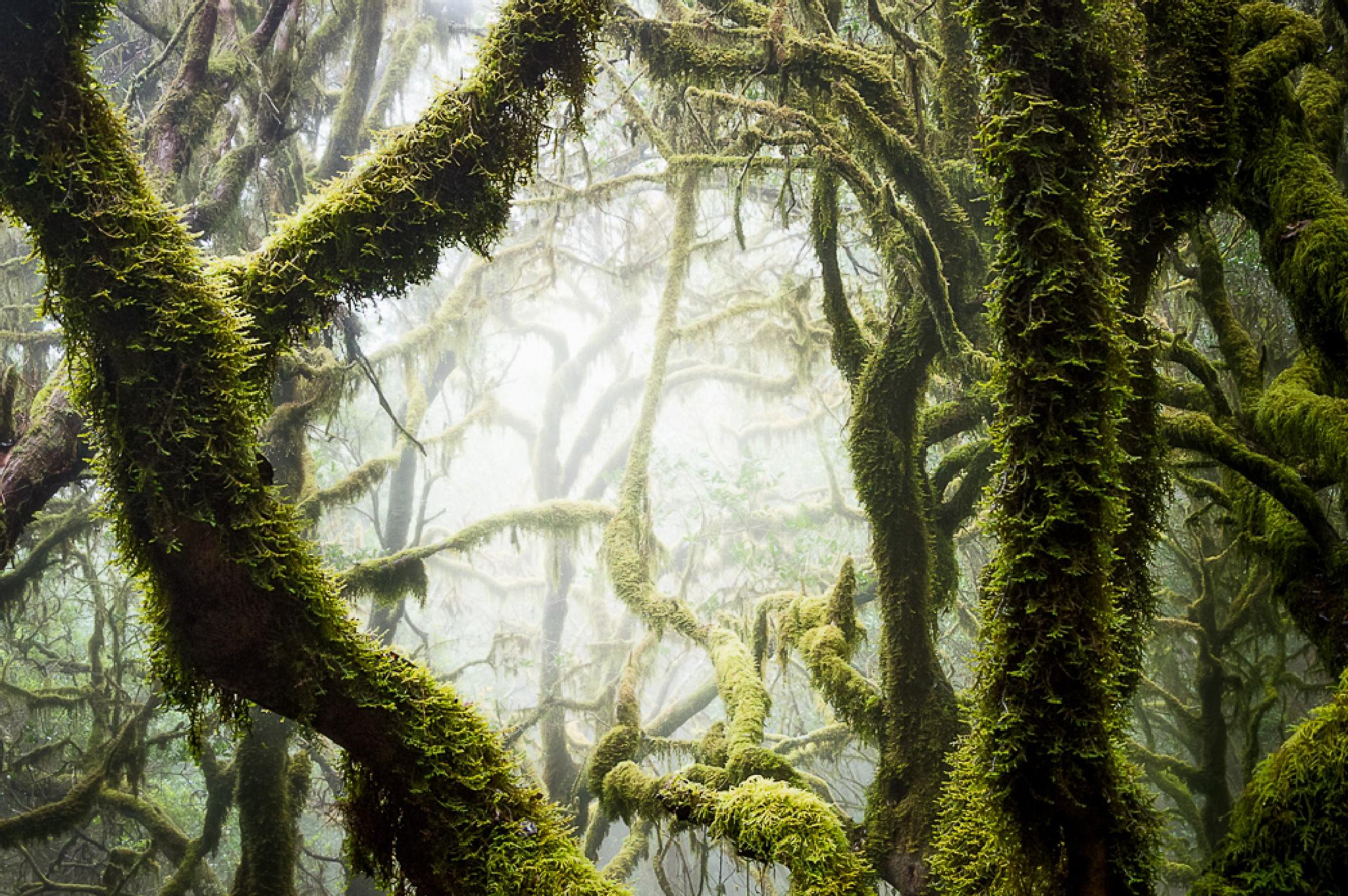 Nebelwald I by Michael Schlitter