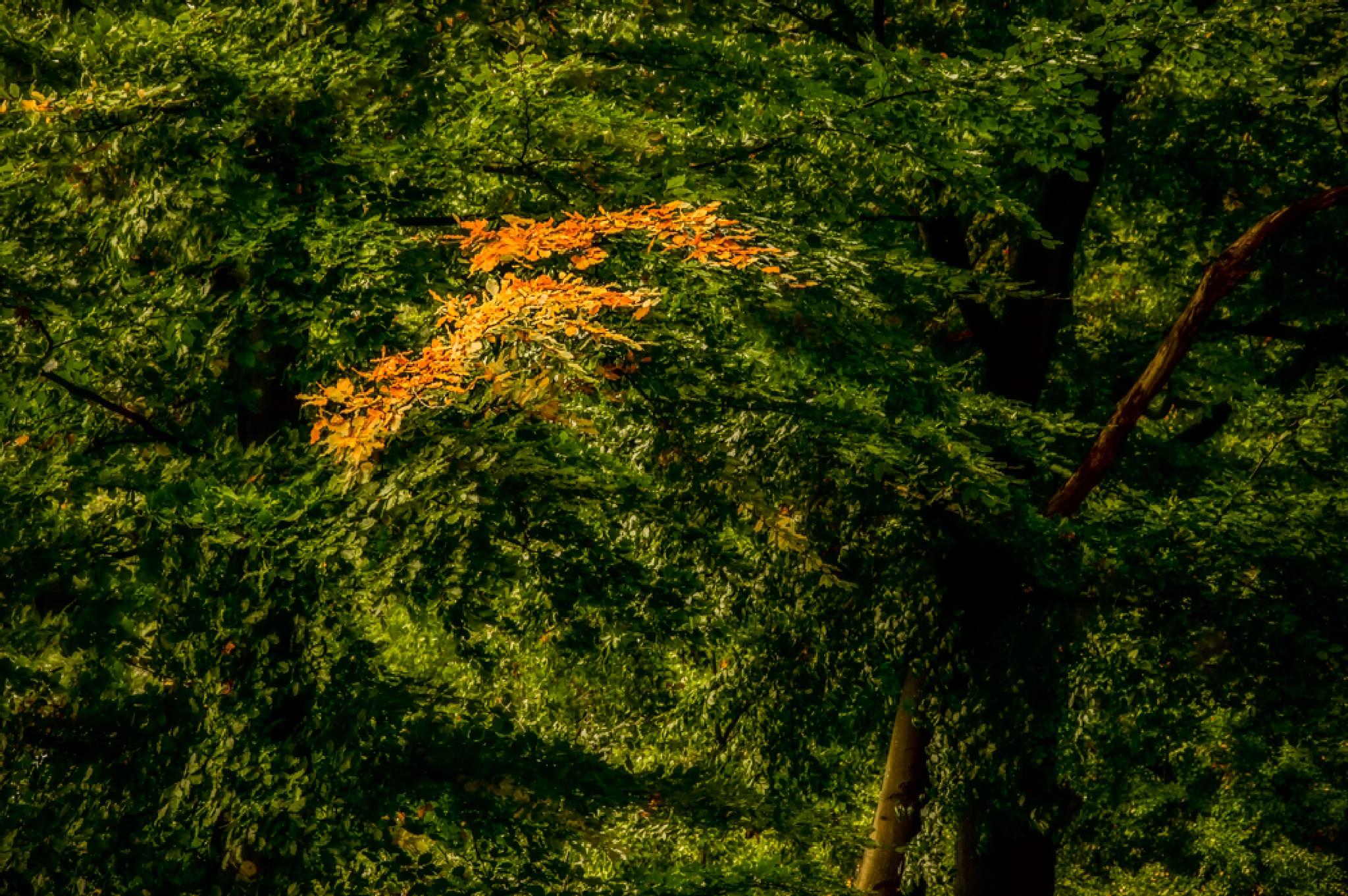 first golden leafs by Michael Schlitter