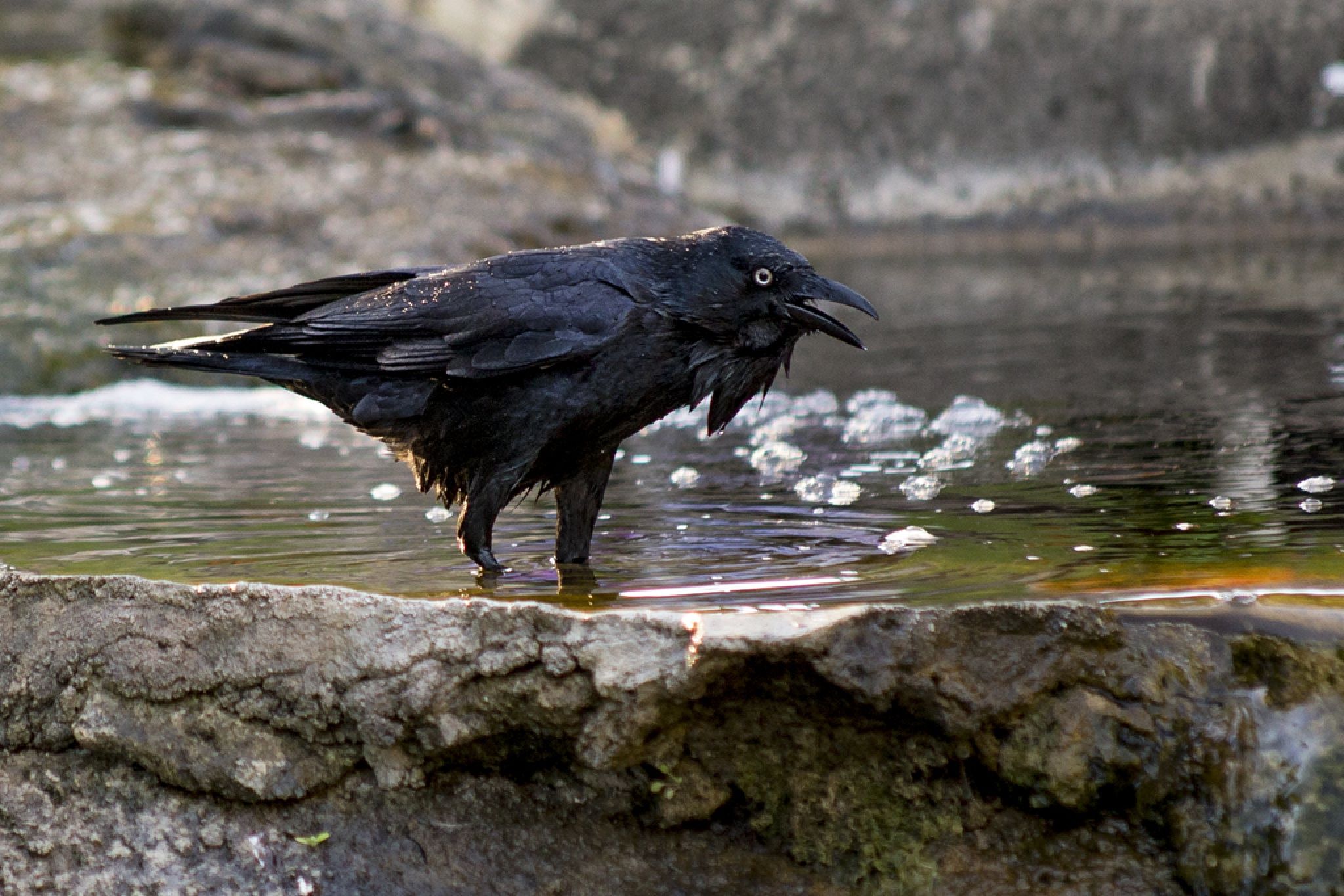 Cemetery Crows 3 by Doc Jones
