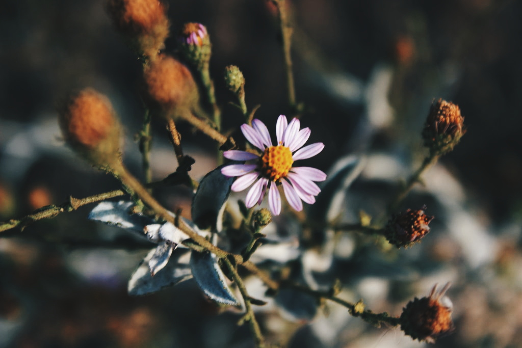 Wildflower by Thepieholephotography