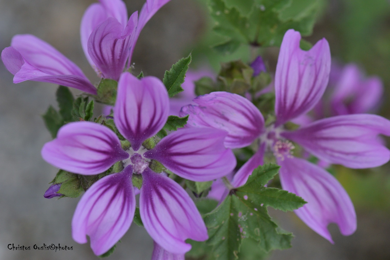 purple by Christos Ouslis