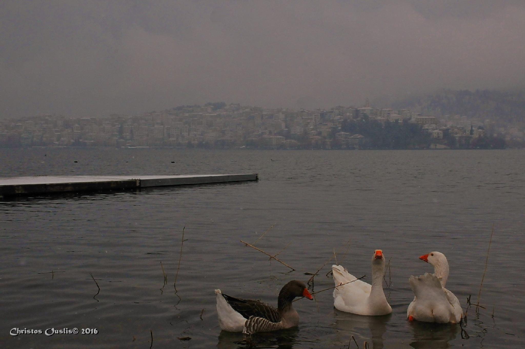 Ducks on lake by Christos Ouslis