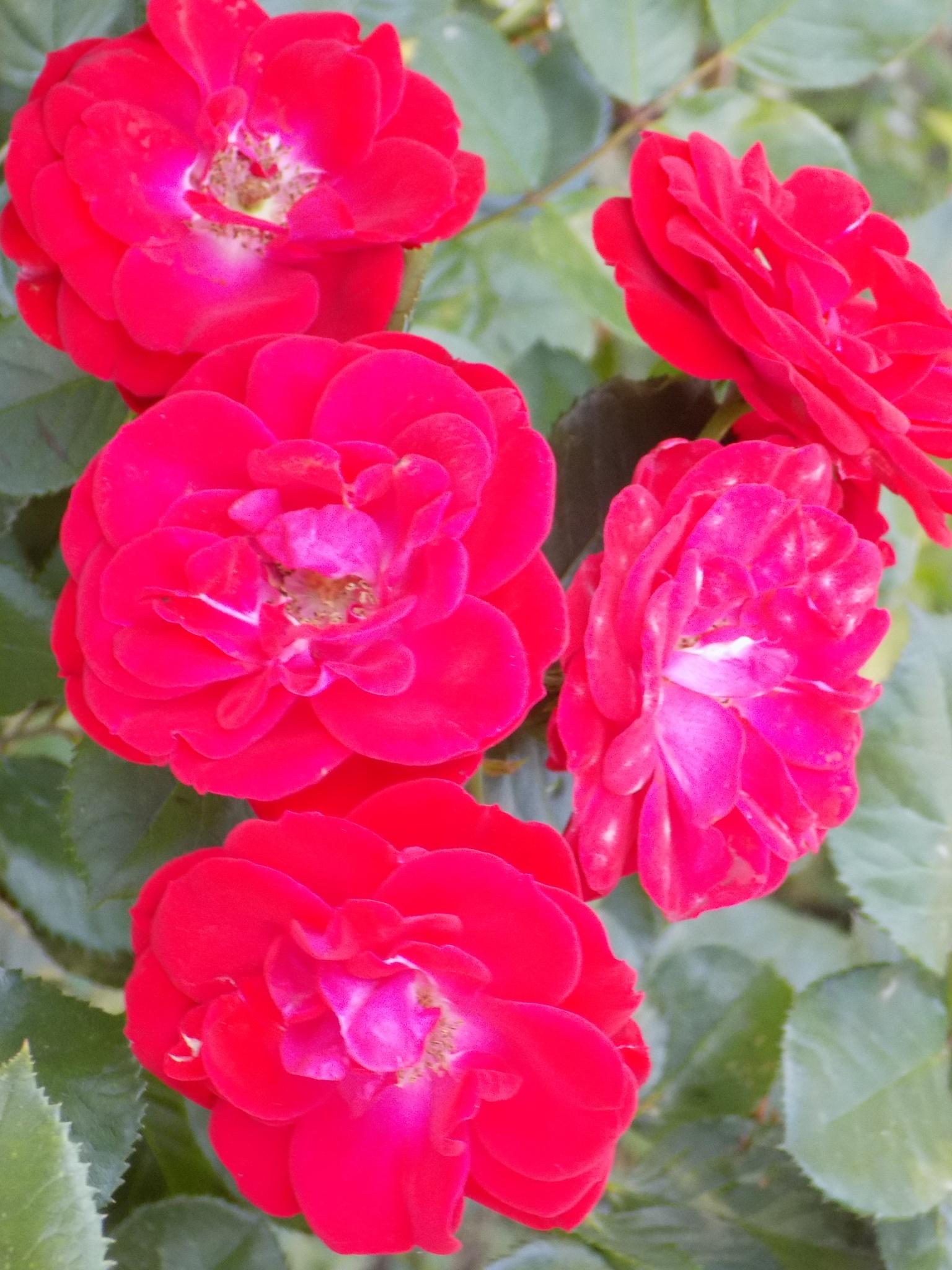 flowers by Mykolay Avatar