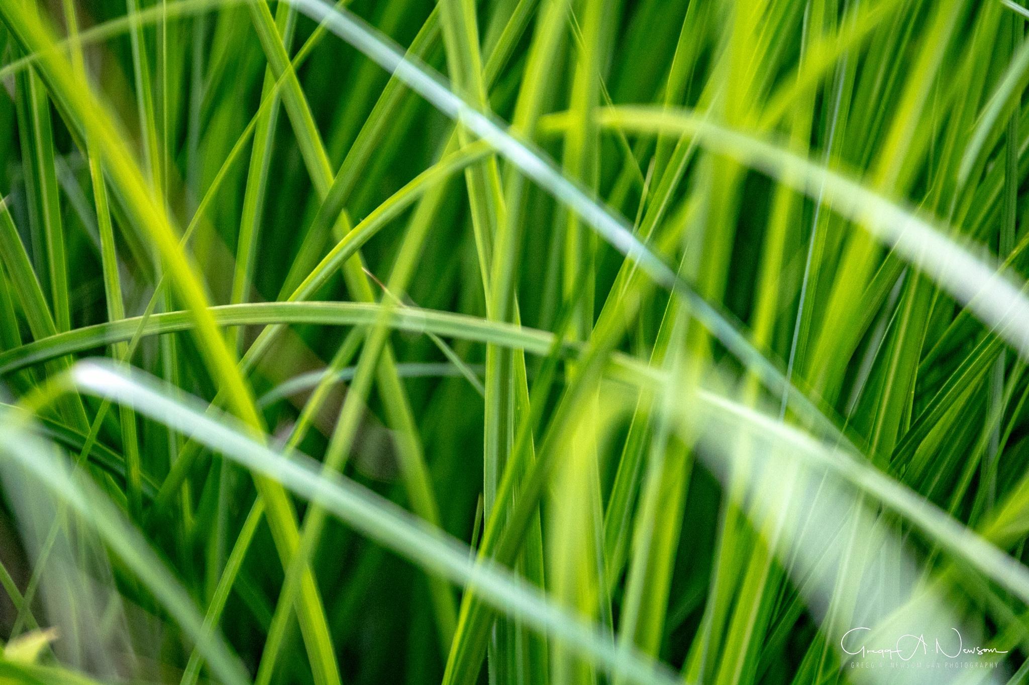 Green by Gnewsom324