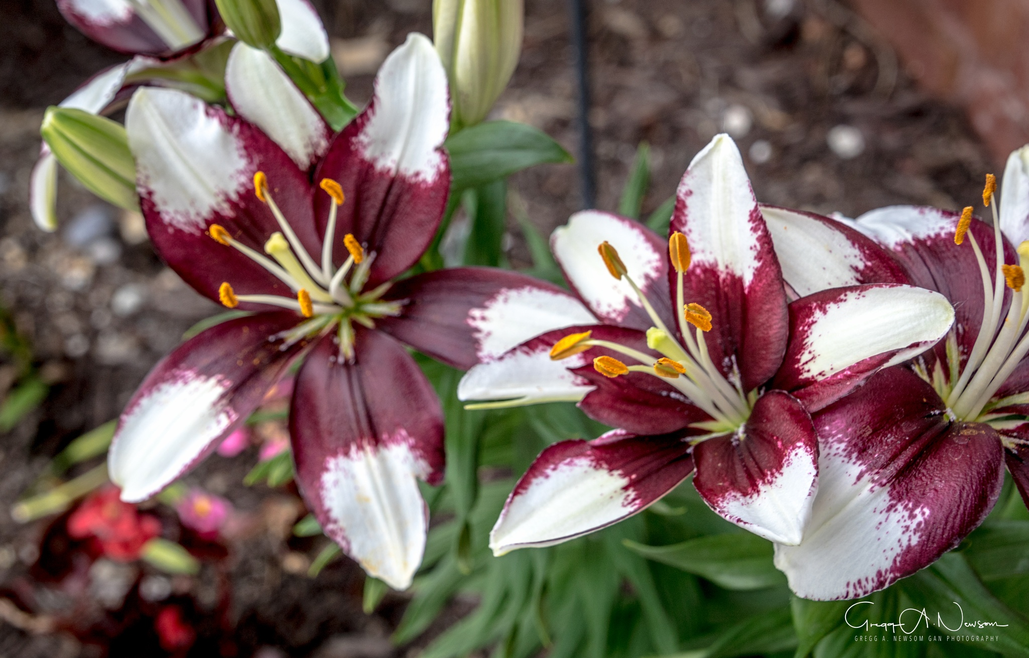 More Flowers. by Gnewsom324