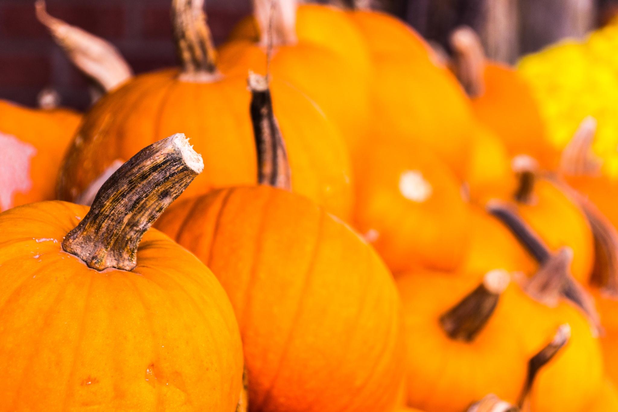 Pumpkins  by Gnewsom324
