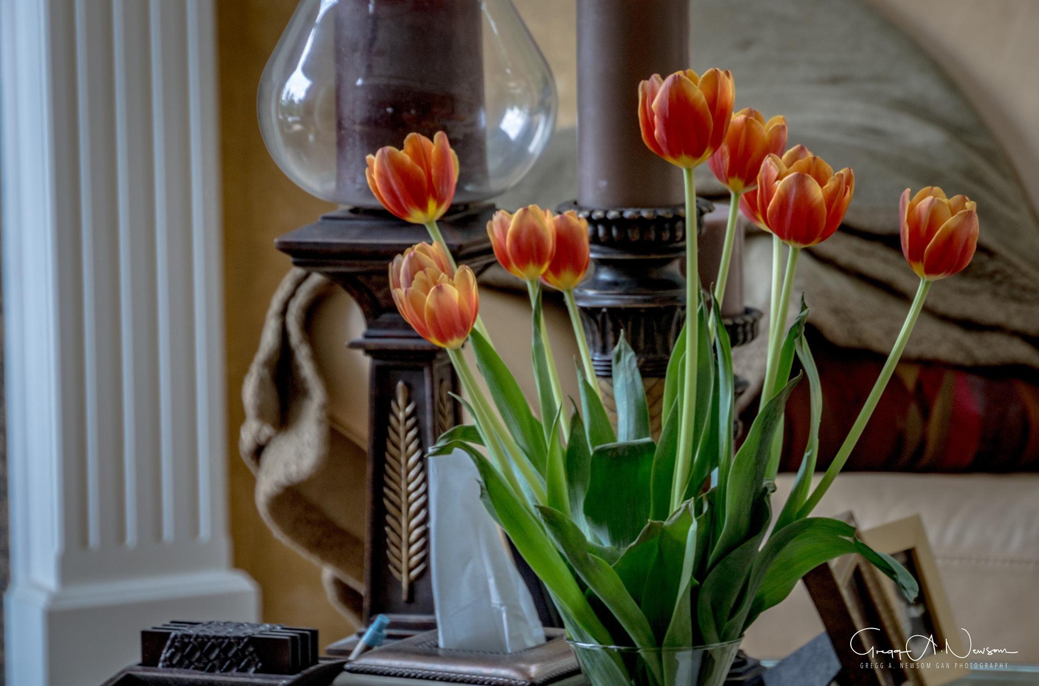 Tulips  by Gnewsom324